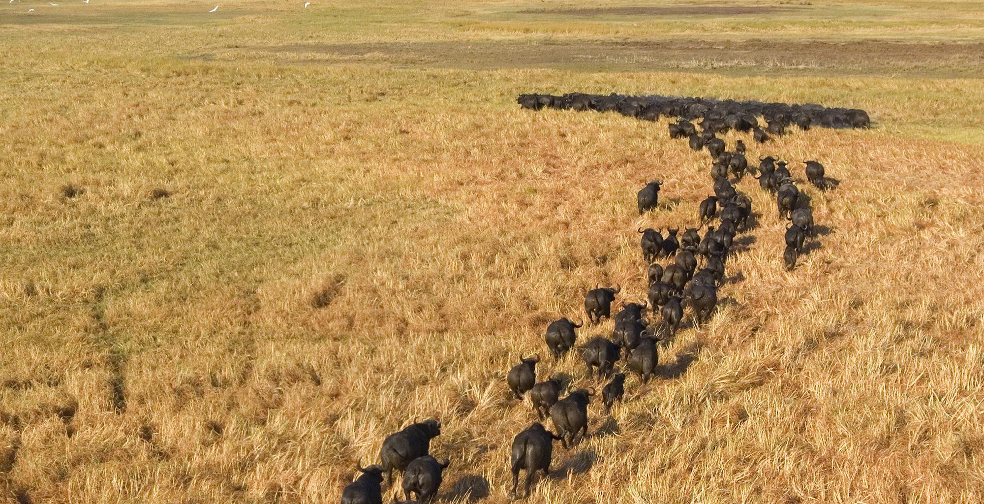Zambia-Kafue-National-Park-Wildlife