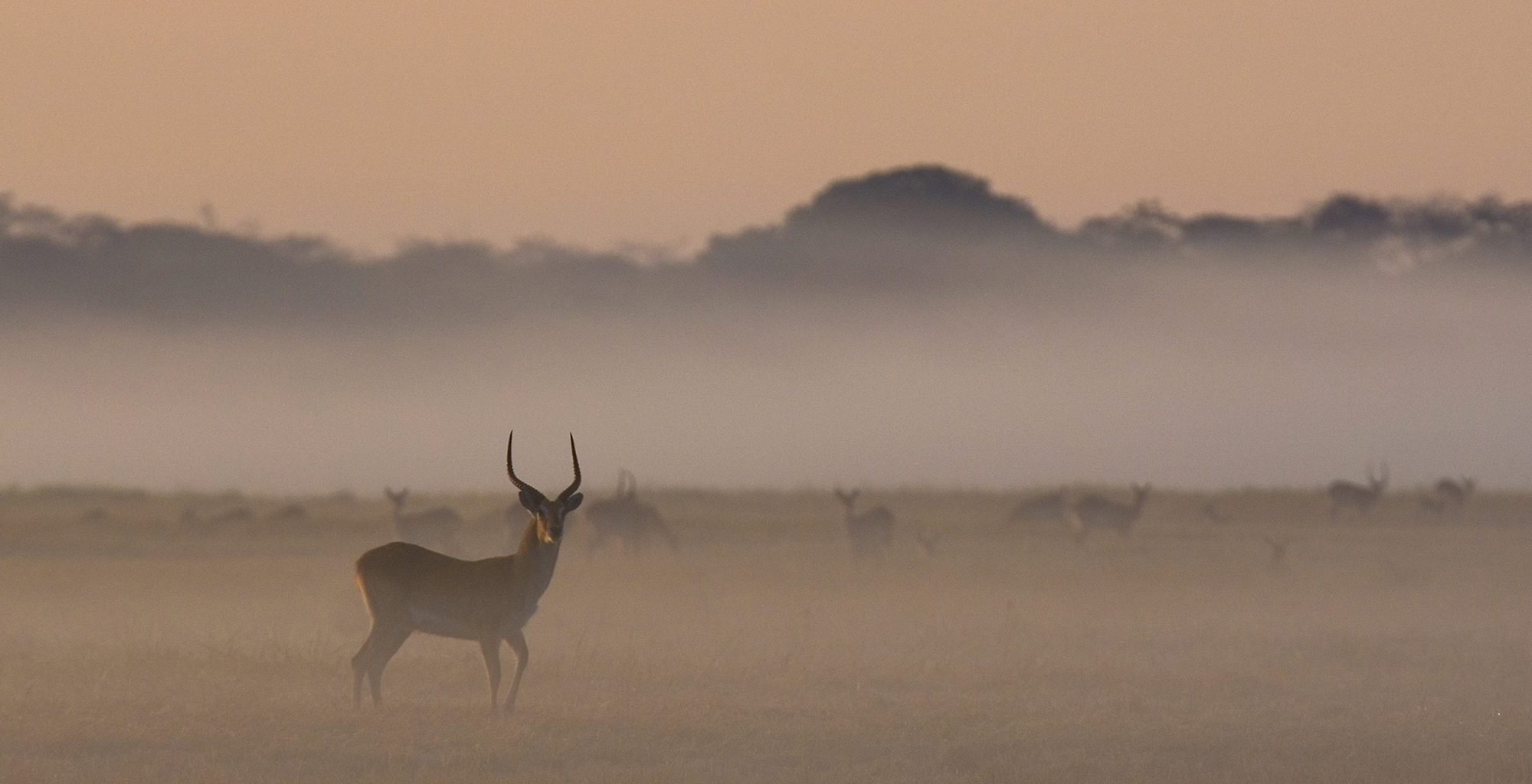 Zambia-Kafue-National-Park-Wildlife-in-Mist
