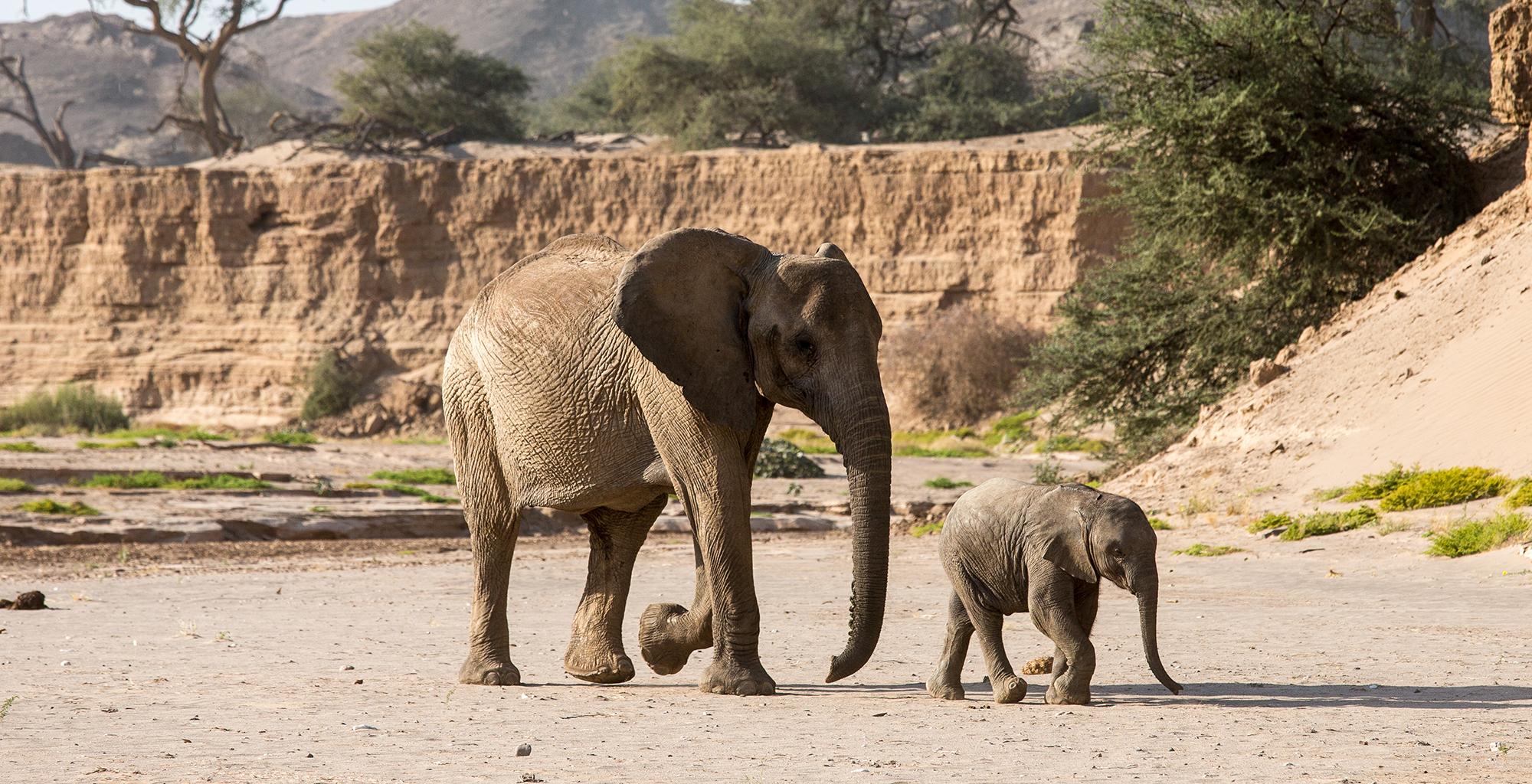 Namibia-Haonib-Skeleton-Coast-Camp-Elephant