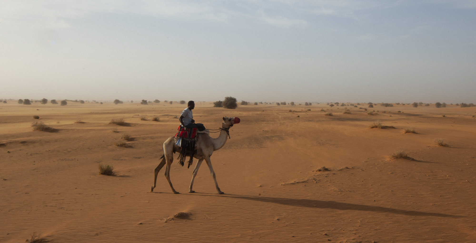 Sudan-Meroe-Camel