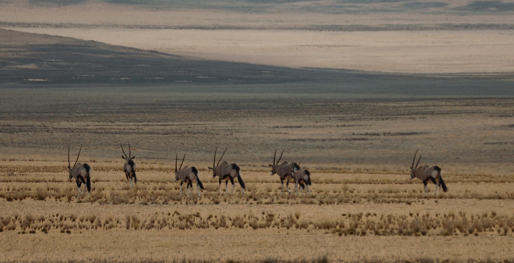 Namibia-Kunene-Camp-Wildlife