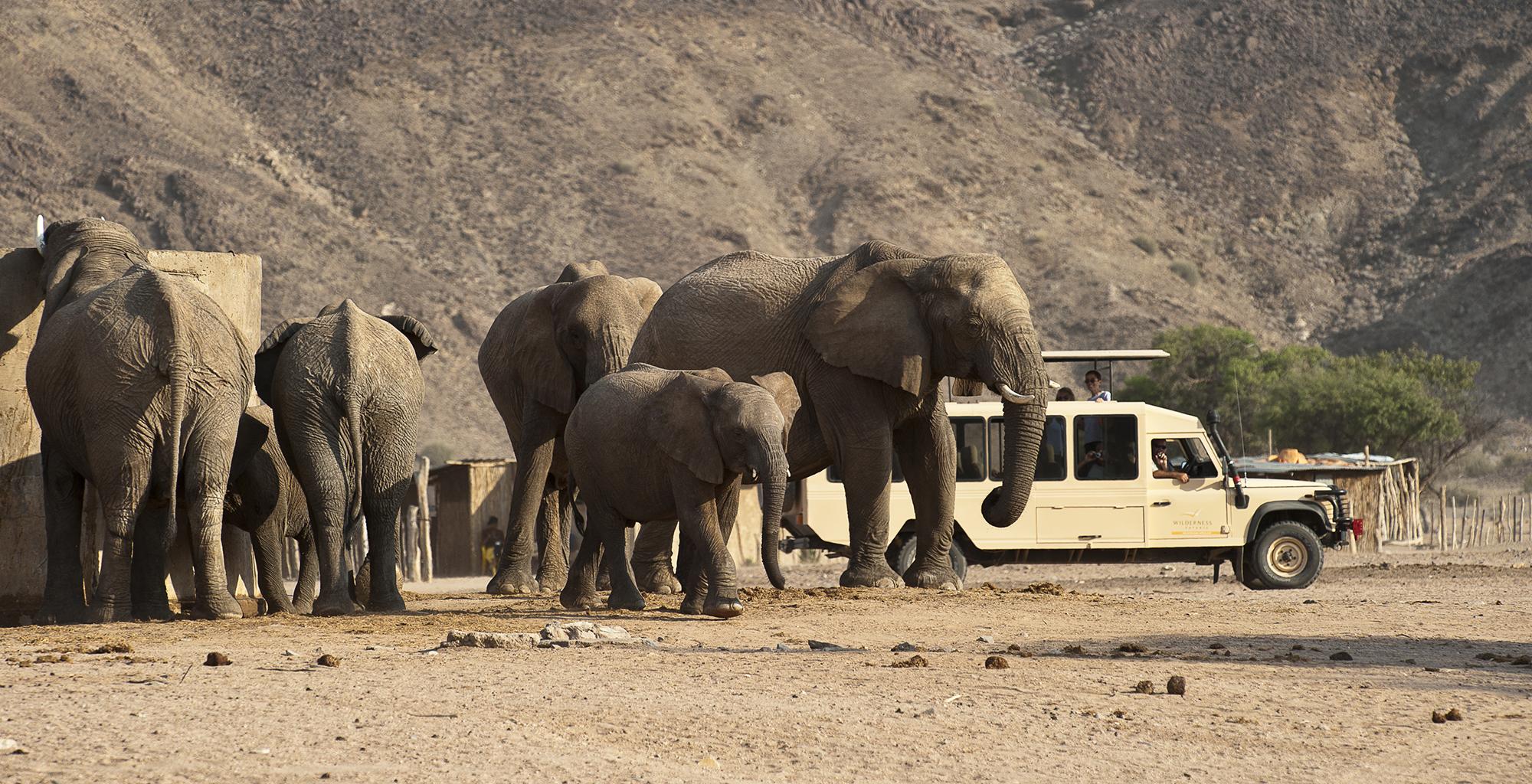 Namibia-Damaraland-Adventurer-Elephants