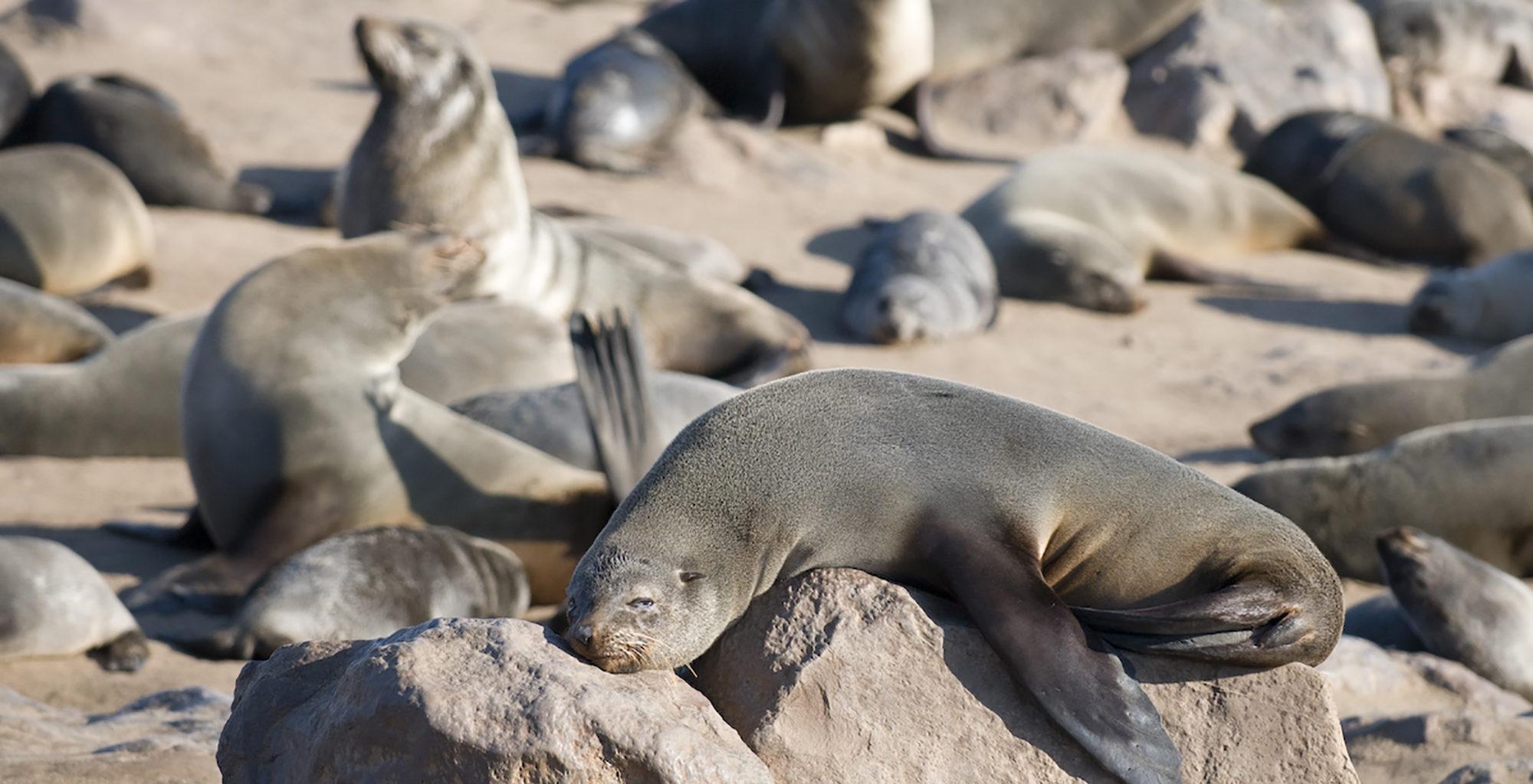 Namibia-Damaraland-Adventurer-Seal