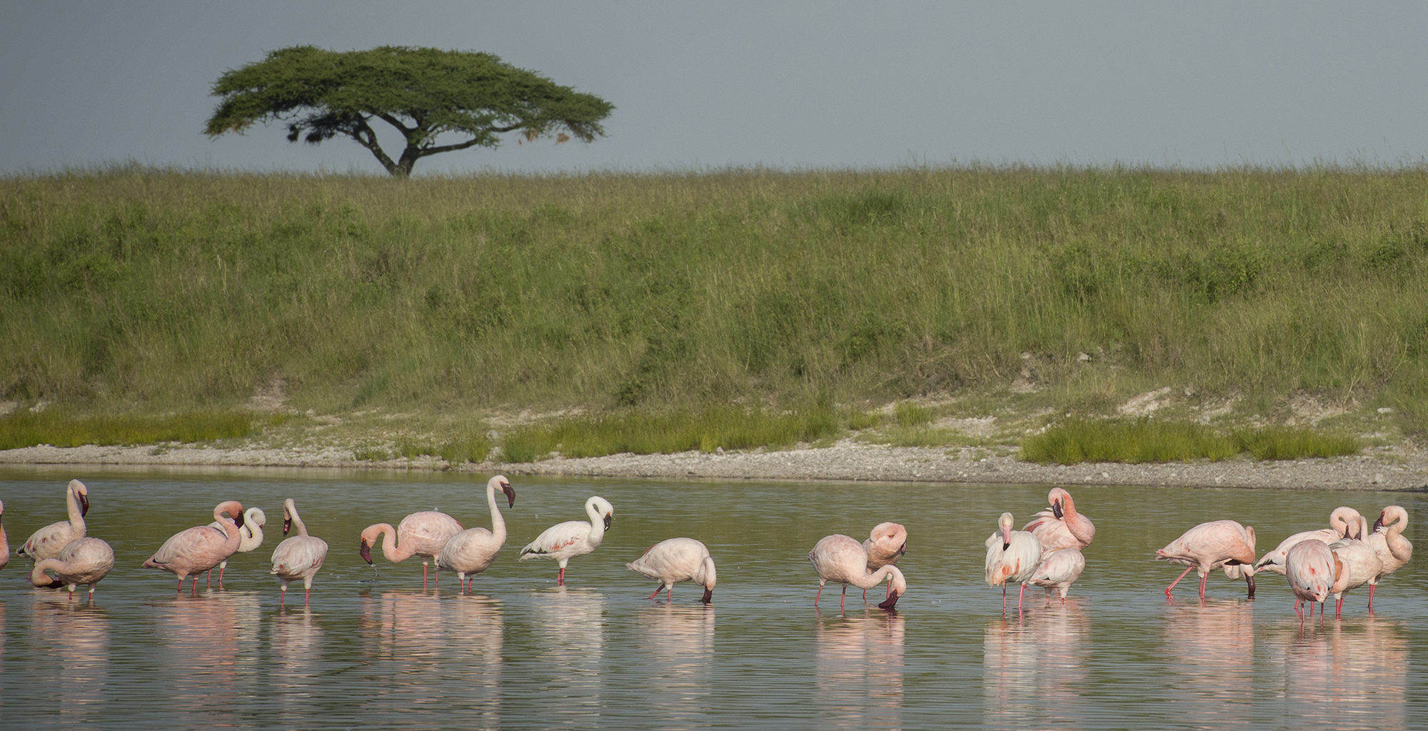 Tanzania-Serengeti-National-Park-Flamingo