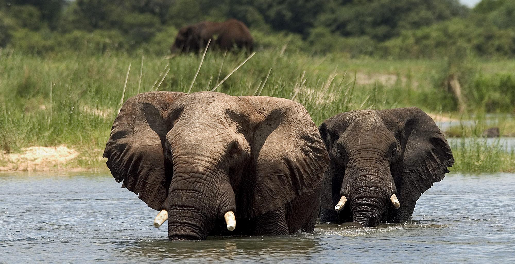 Zambia-Victoria-Falls-wildlife-Elephant