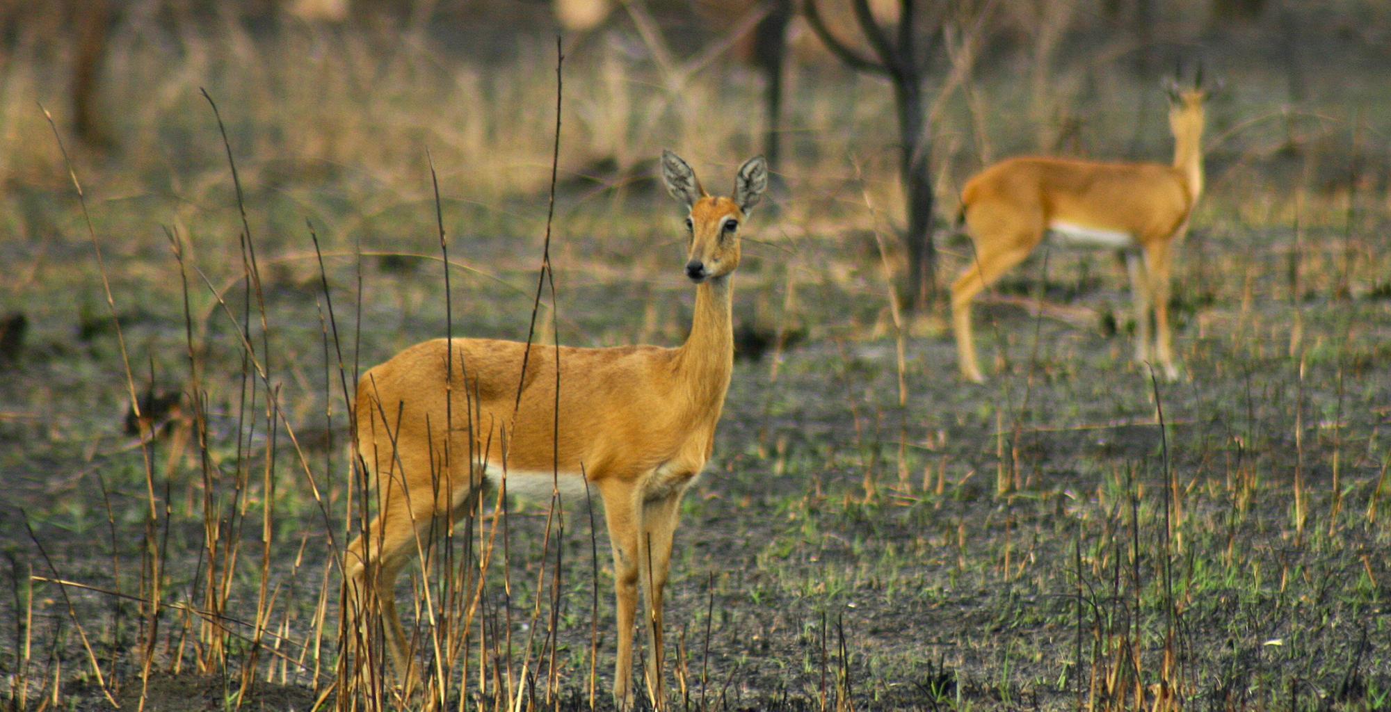 Mozambique-Gorongosa-National-Park-Explora-Gorongosa-Wildlife