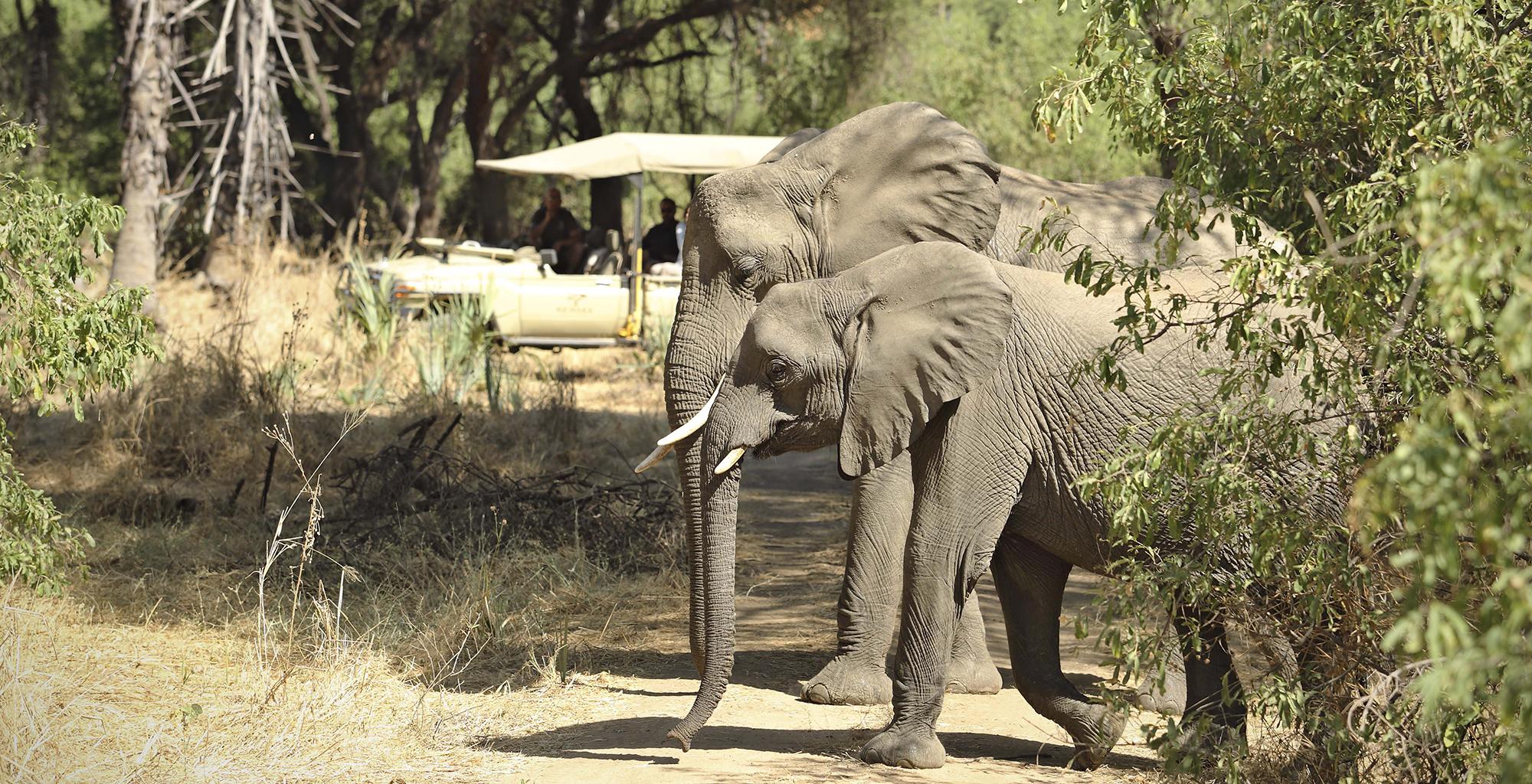 Tanzania-Kichaka-Expeditions-Wildlife-Elephant