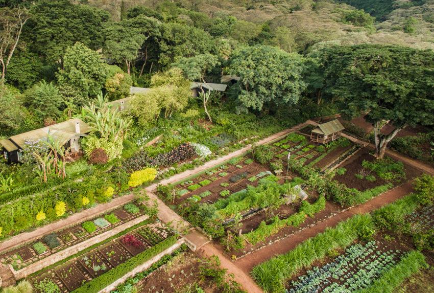Tanzania-Gibbs-Farm-Aerial