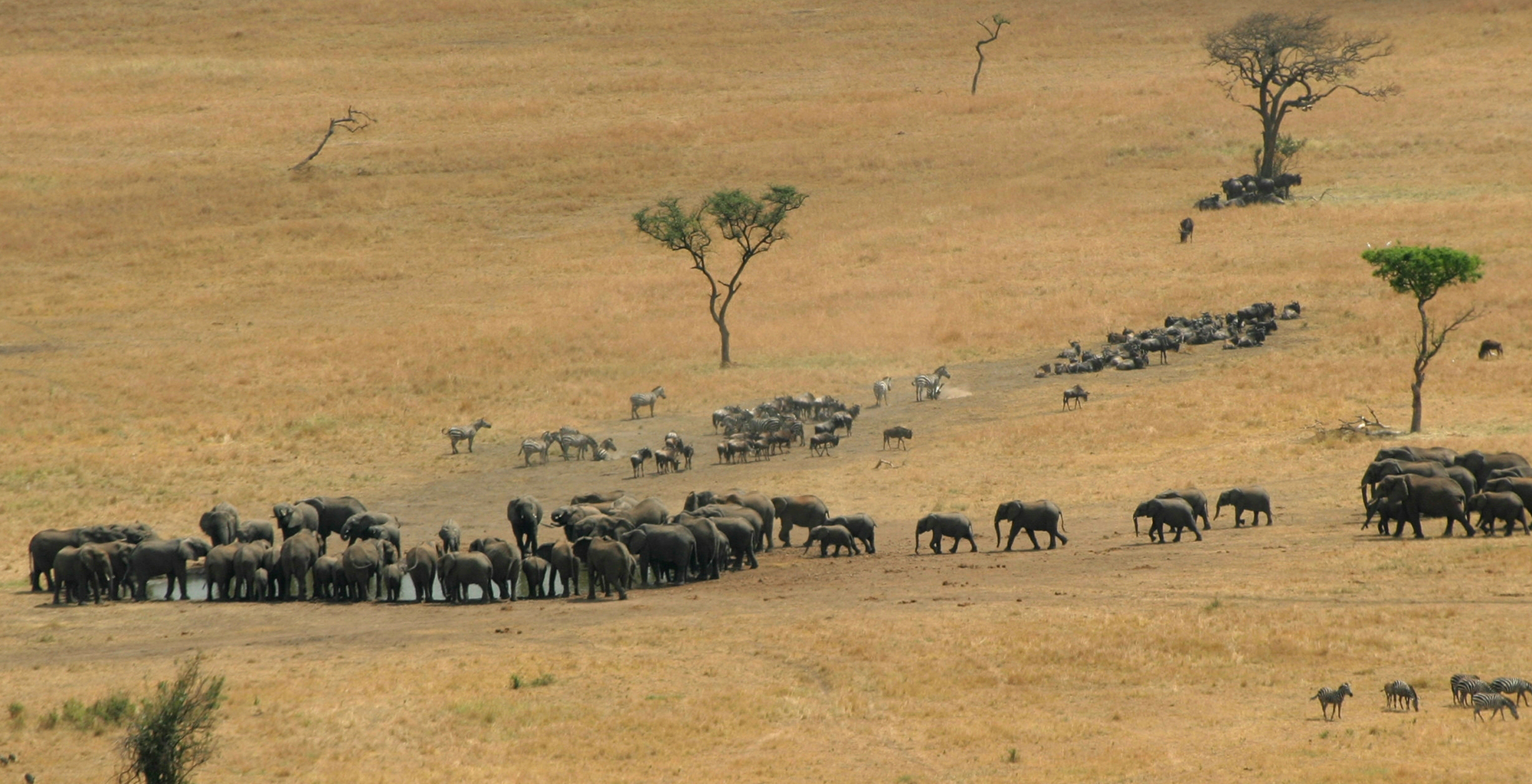 Tanzania-Grumeti-Reserves-Elephant-Waterhole