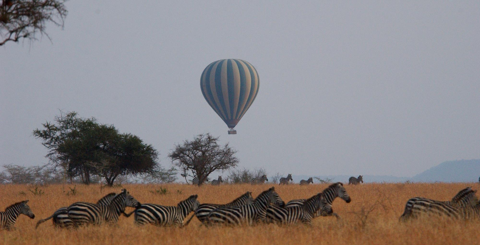 Tanzania-Grumeti-Reserves-Zebra-Ballooning