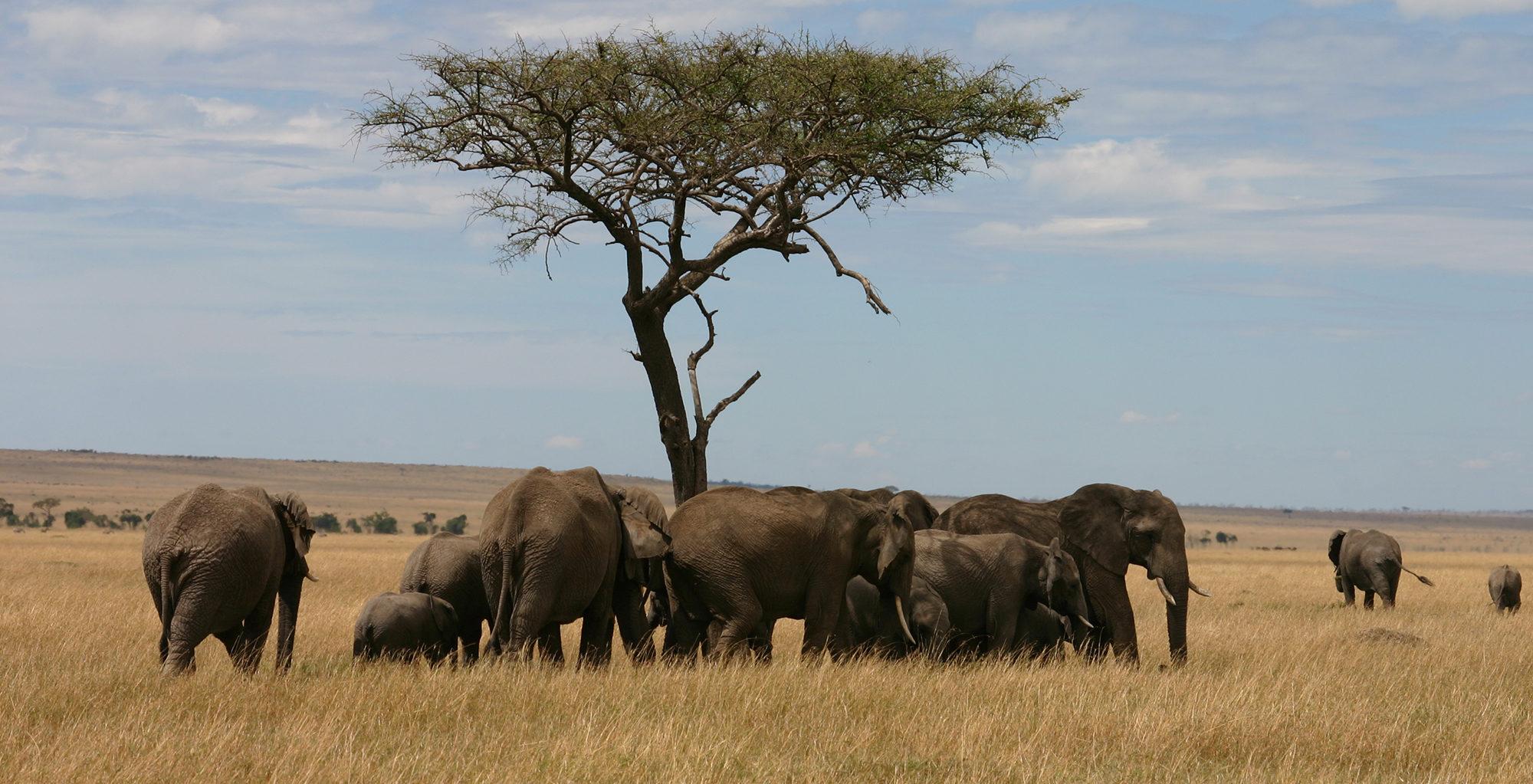 Kenya-Saruni-Mara-Elephants