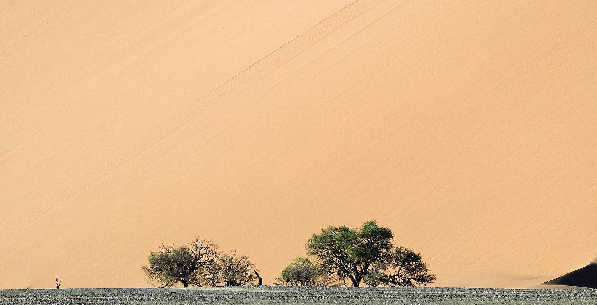Namibia-Greater-Sossusvlei-Landscape-Tree