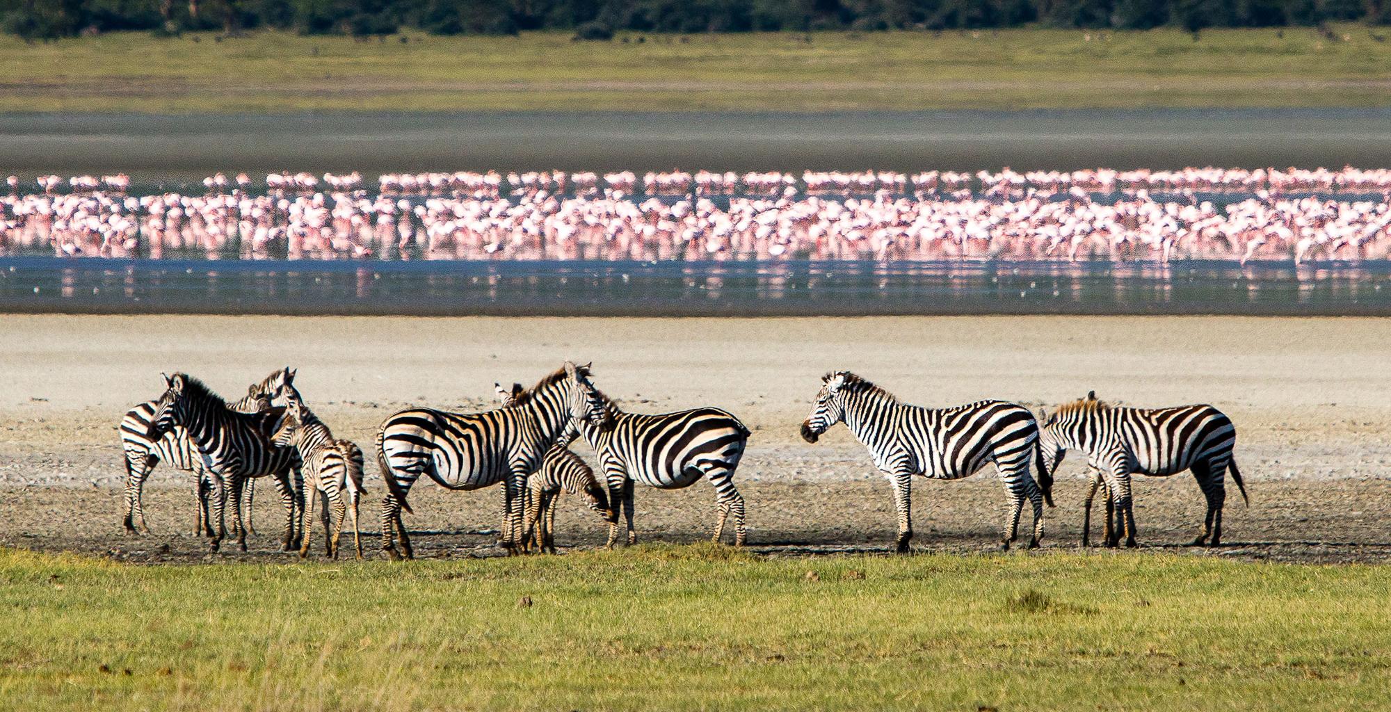 Tanzania-Gibbs-Farm-Wildlife