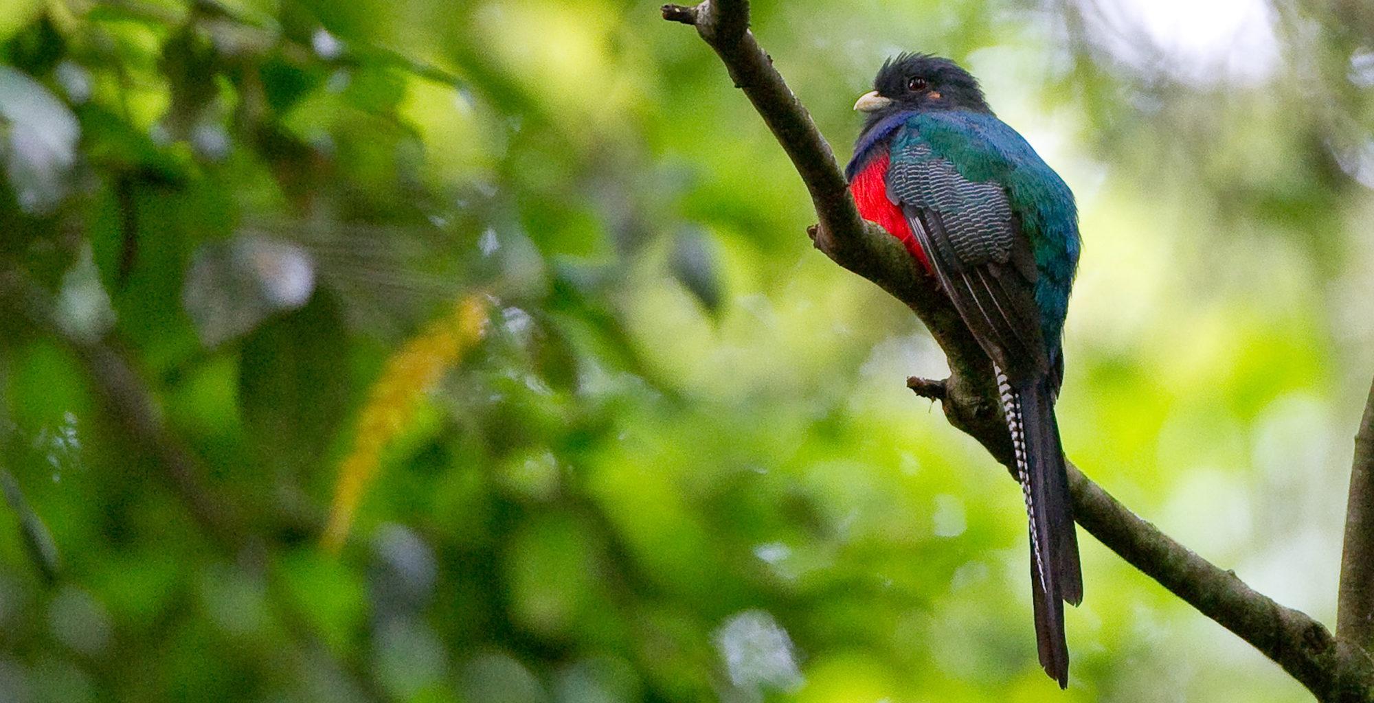 Malawi-Nyika-National-Park-Chelinda-Lodge-Birdlife