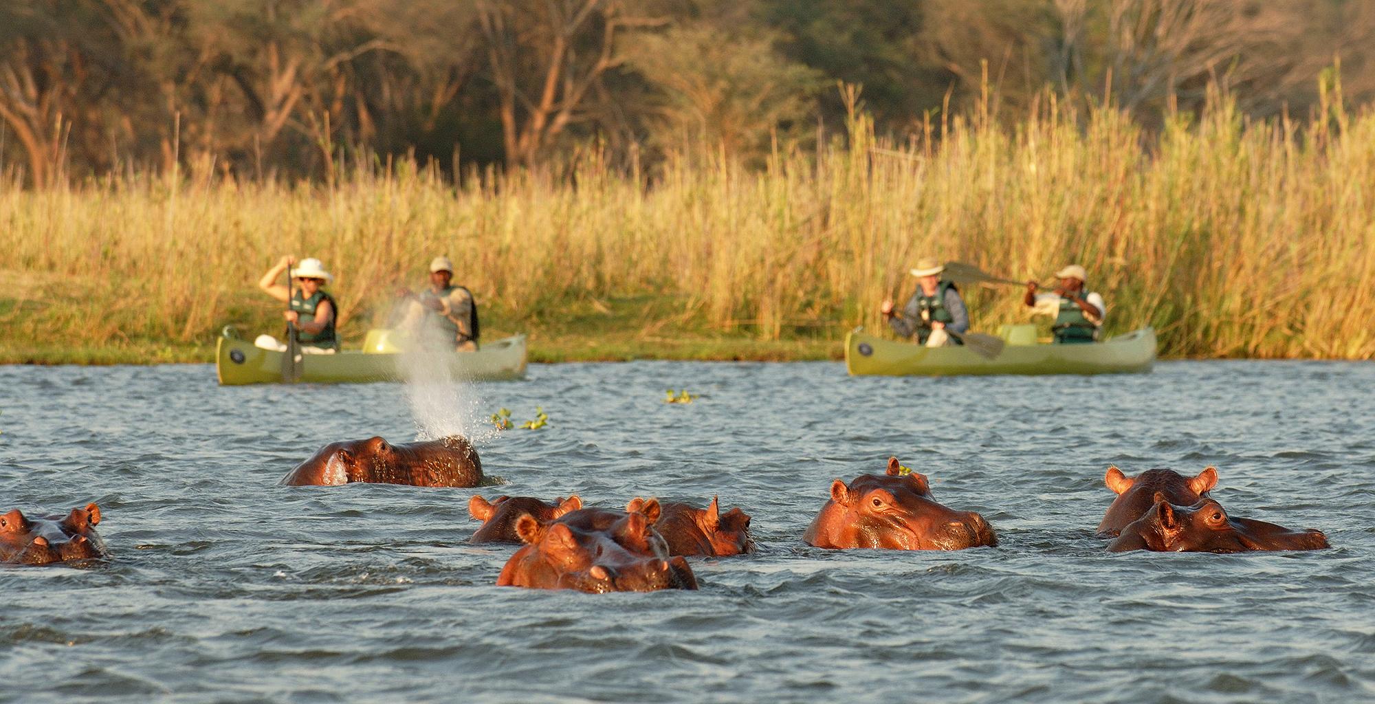 Zambia-Old-Mondoro-Canoeing-Hippo