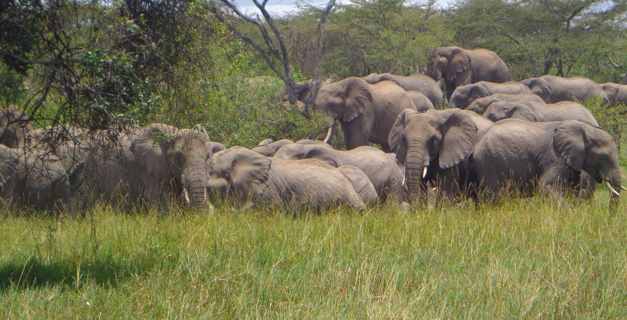 Kenya-Olarro-Lodge-Elephant