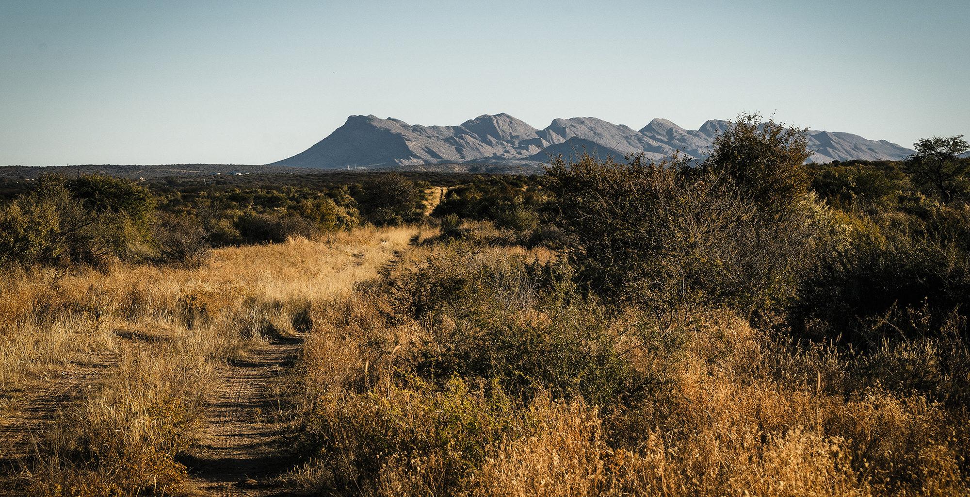 Namibia-Windhoek-Surrounds-Bush