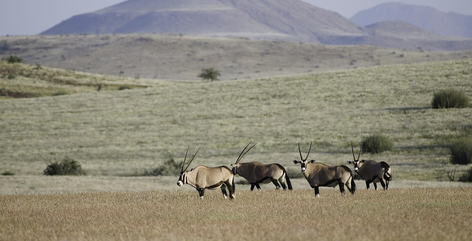 Namibia-Damaraland-Camp-Wildlife