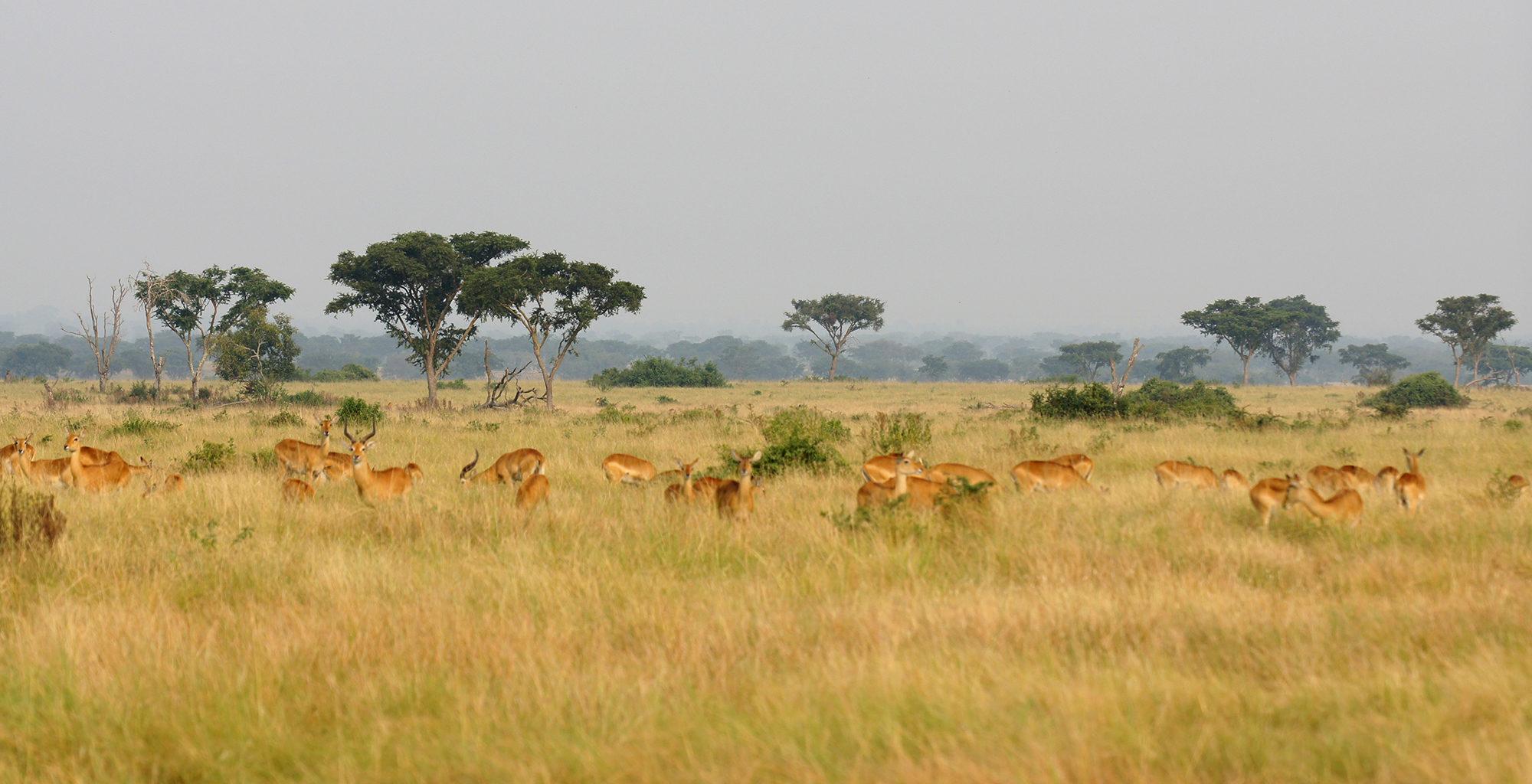 Uganda-Queen-Elizabeth-National-Park-Wildlife