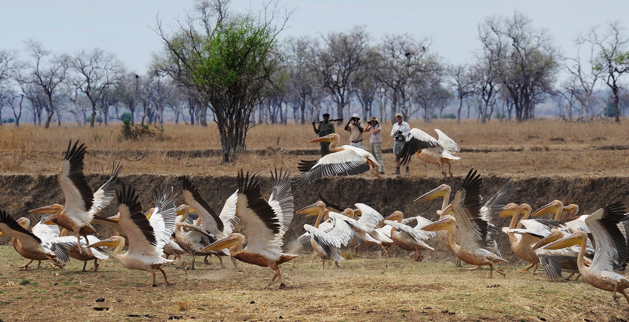 Zambia-Tafika-Camp-Birdlife