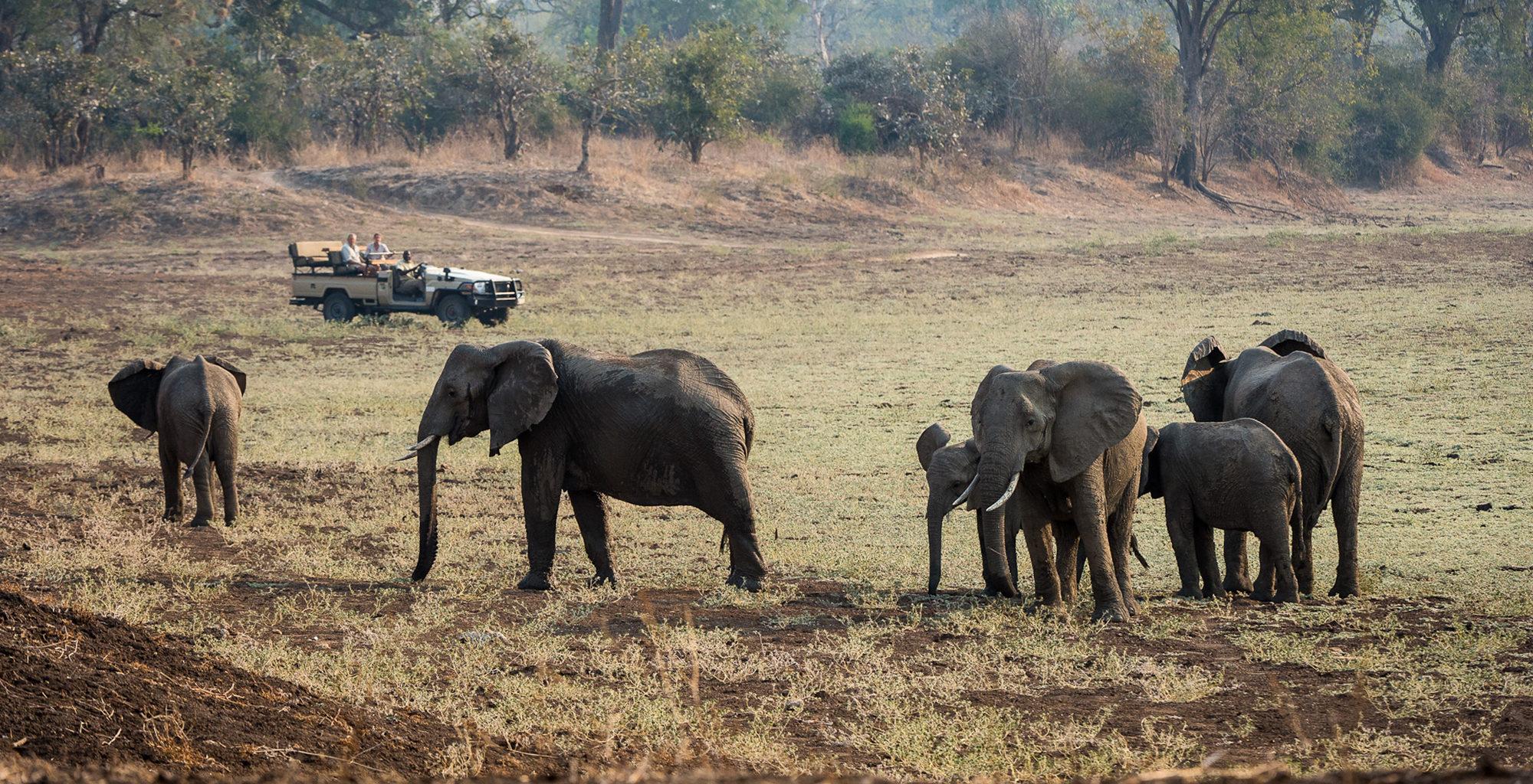 Zambia-Robins-House-Wildlife-Elephant