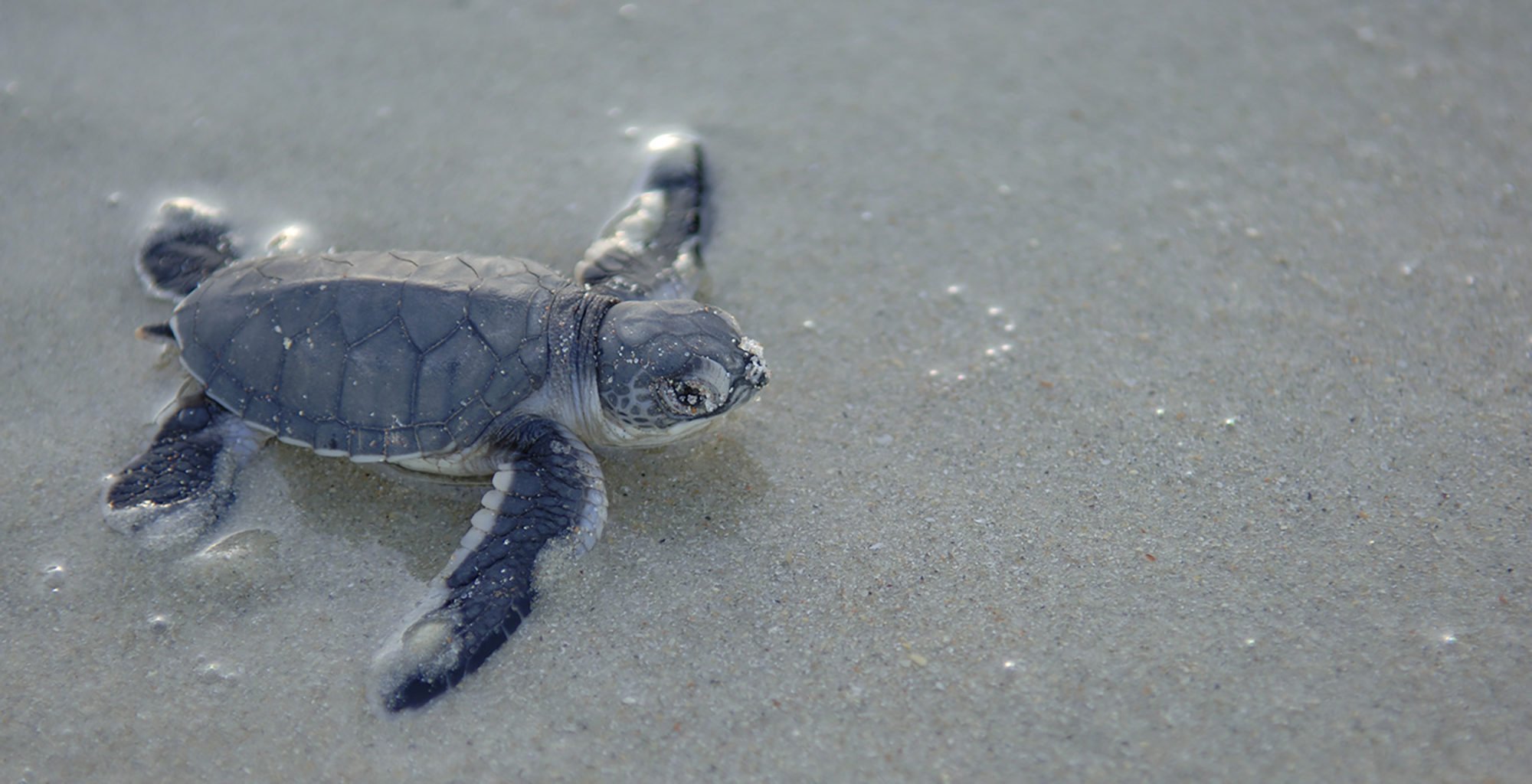 Tanzania-Mainland-Coast-Turtle