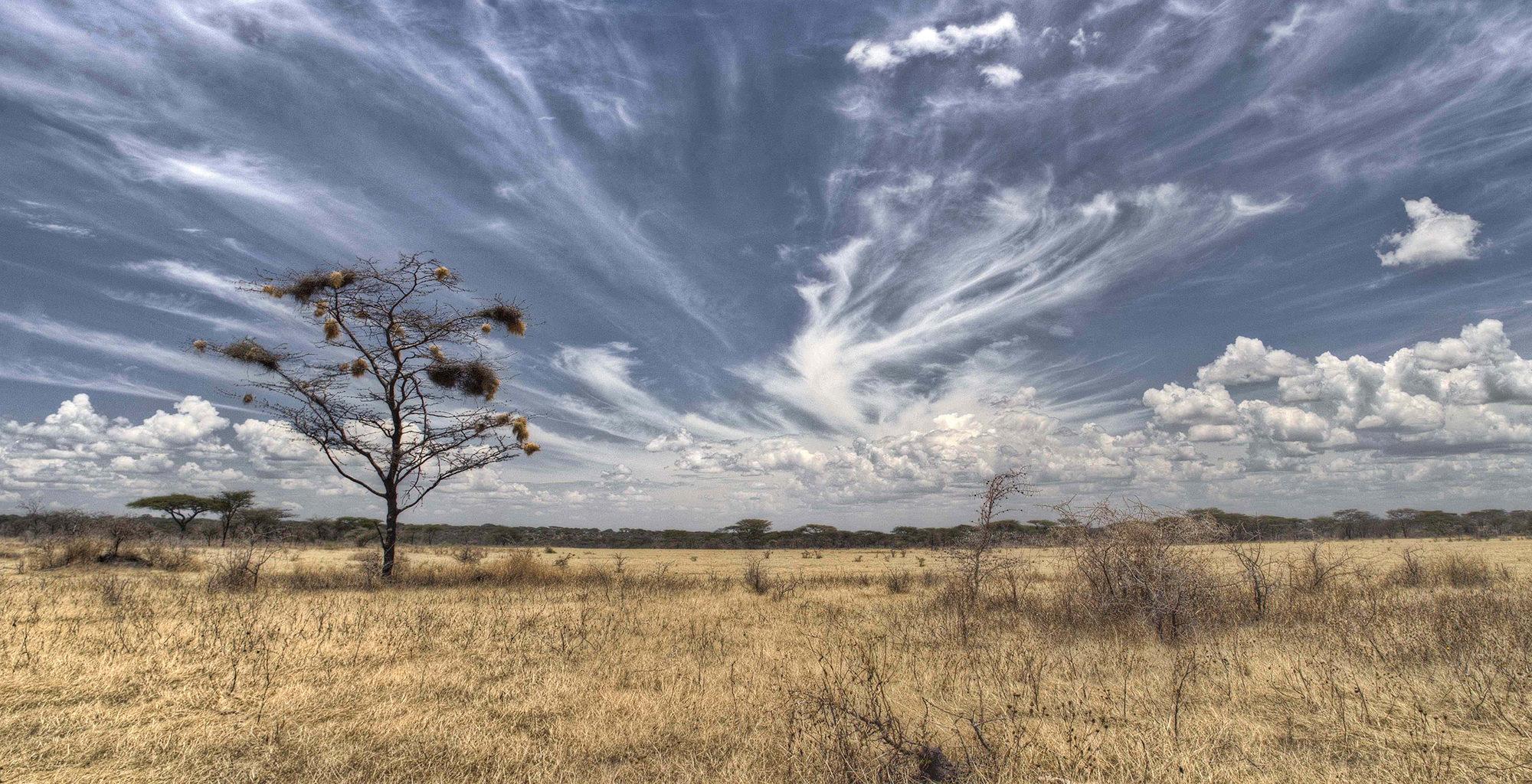 Tanzania-Serengeti-National-Park-Landscape