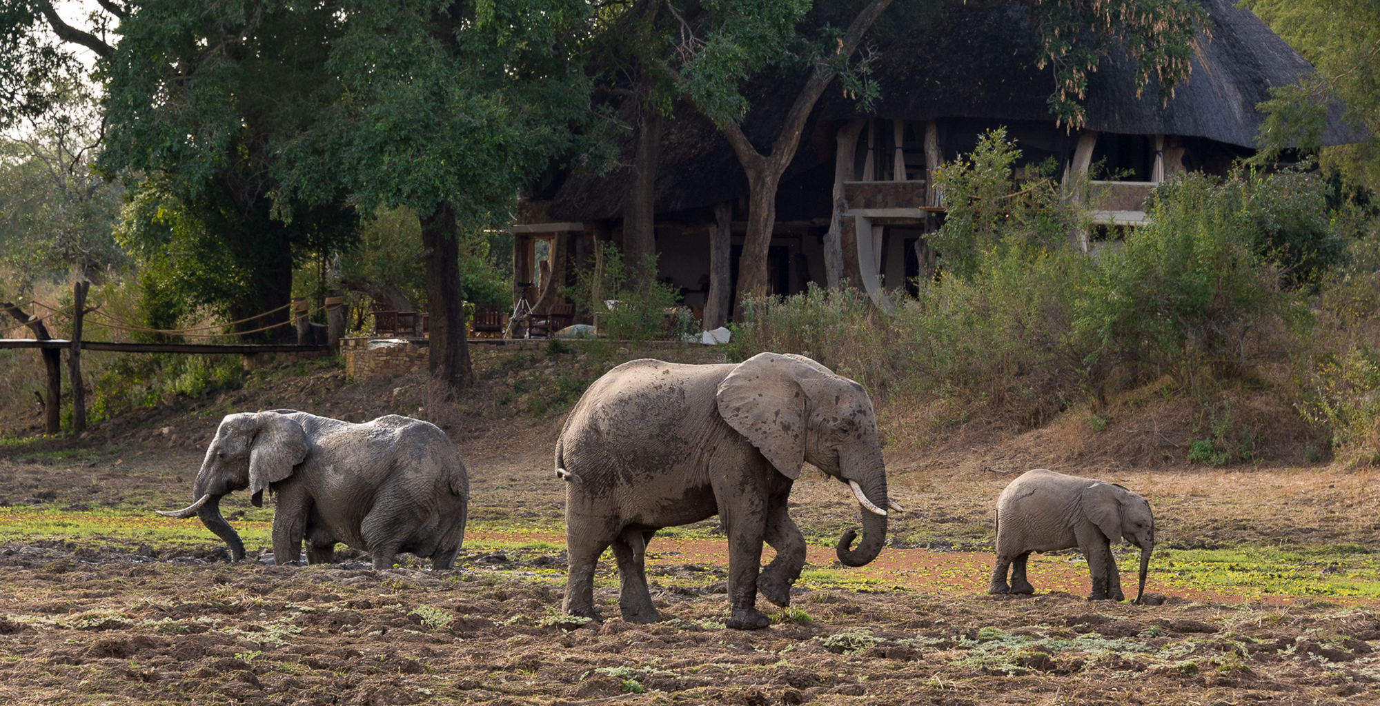 Zambia-Luangwa-Safari-House-Wildlife-Elephant