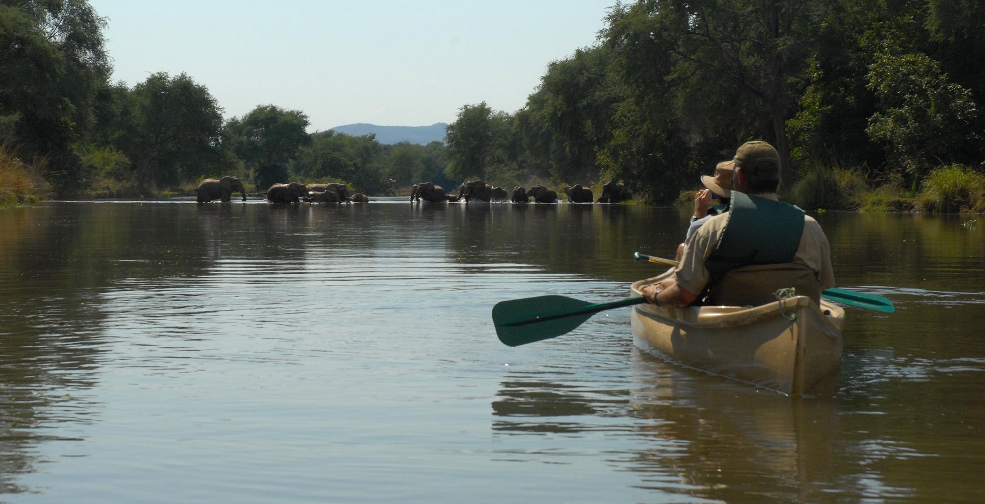 Zambia-Zambezi-Kulefu-Canoeing-Elephant