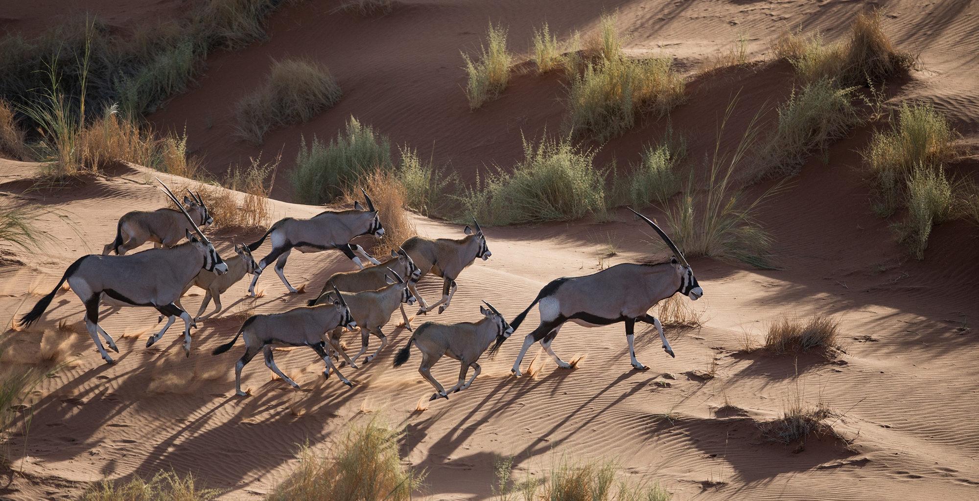 Namibia-Sossusvlei-Desert-Lodge-Wildlife