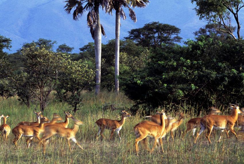 Uganda-Semliki-National-Park-Wildlife-Hero
