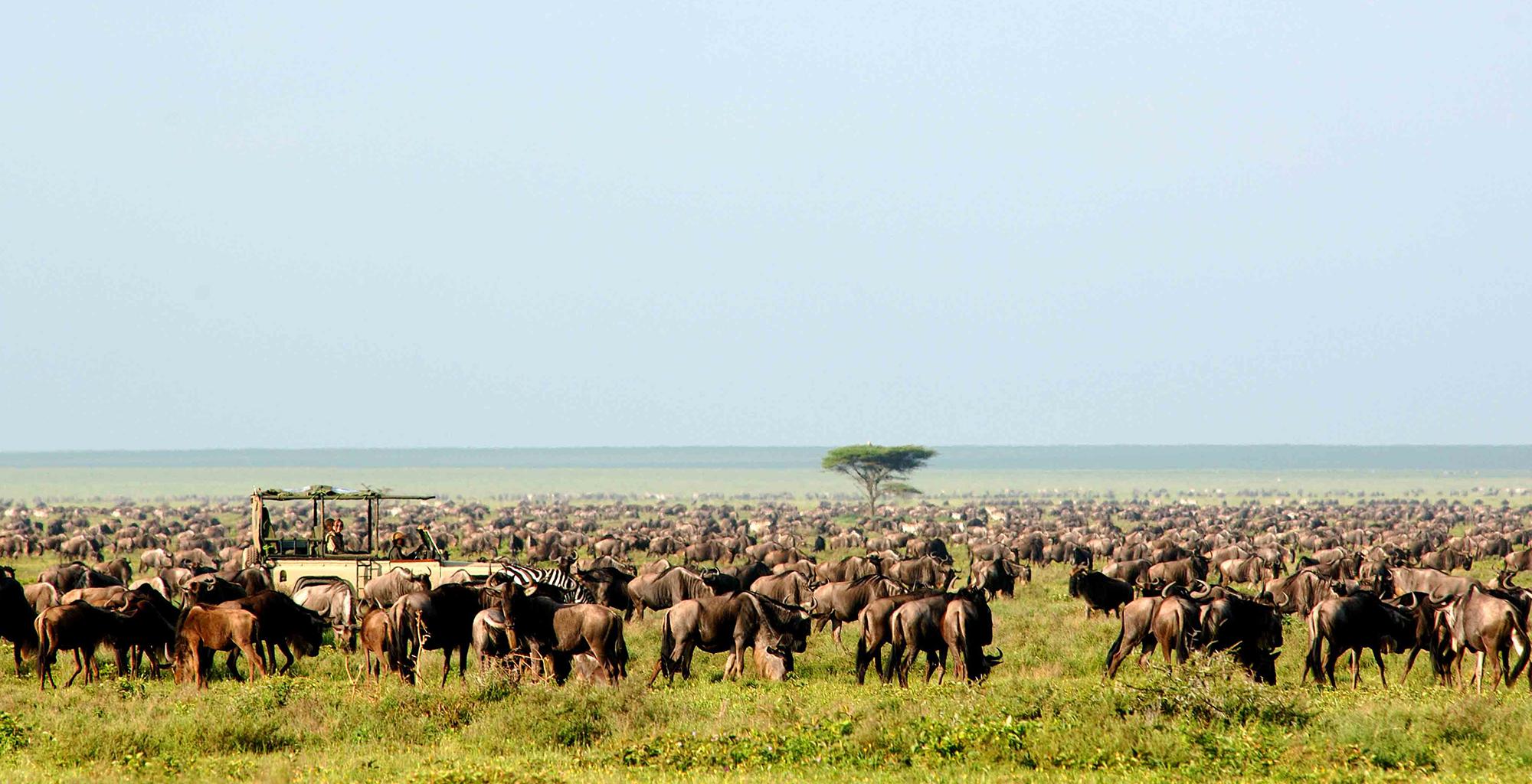 Tanzania-Serengeti-Safari-Camp-Game-Drive