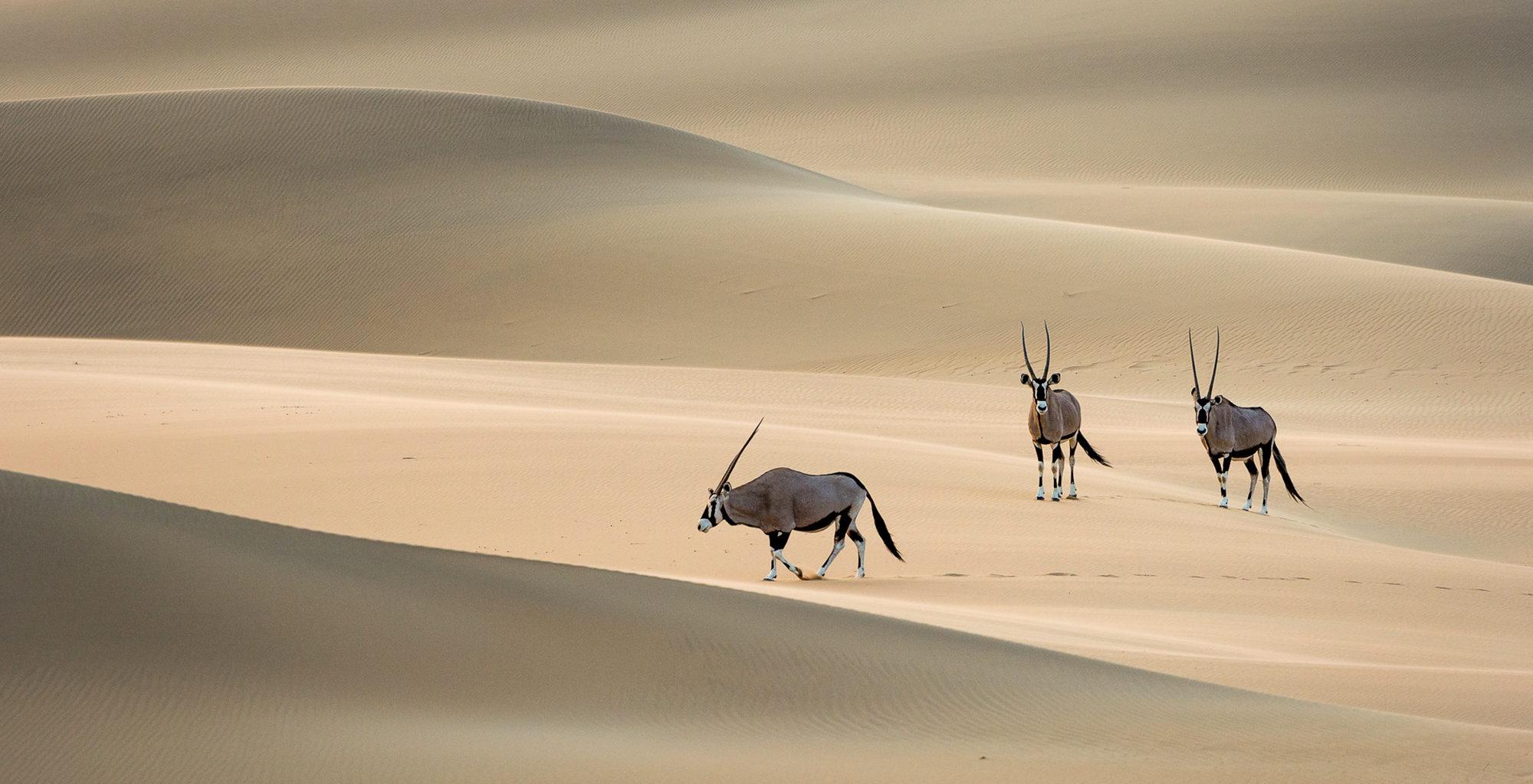 Namibia-Kaokoland-Wildlife-Oryx