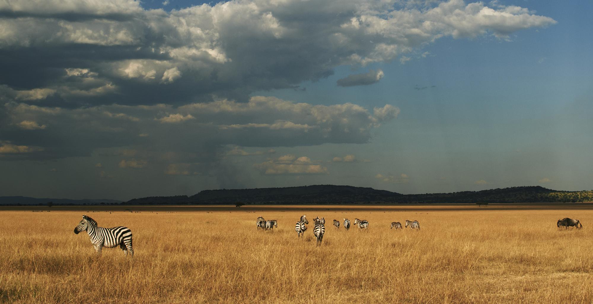 Tanzania-Grumeti-Reserves-Zebras