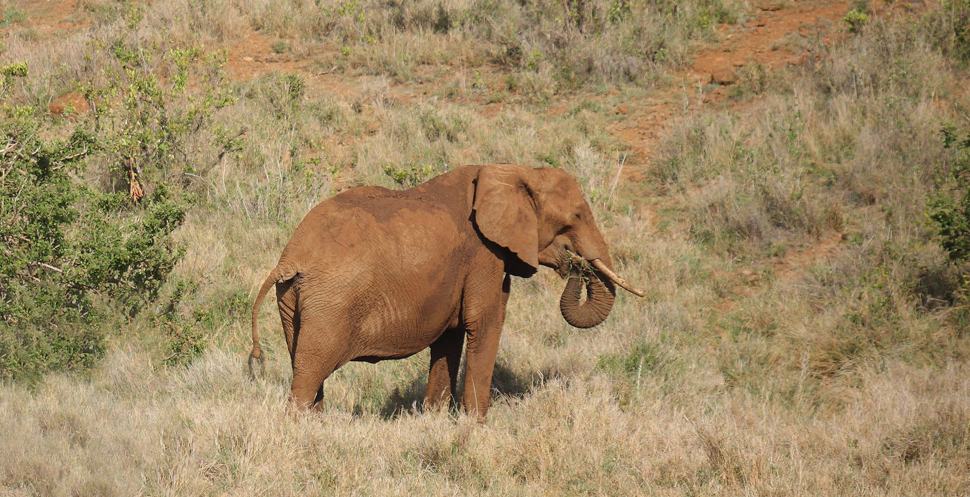 Kenya-Sirikoi-Willies-Camp-Elephant