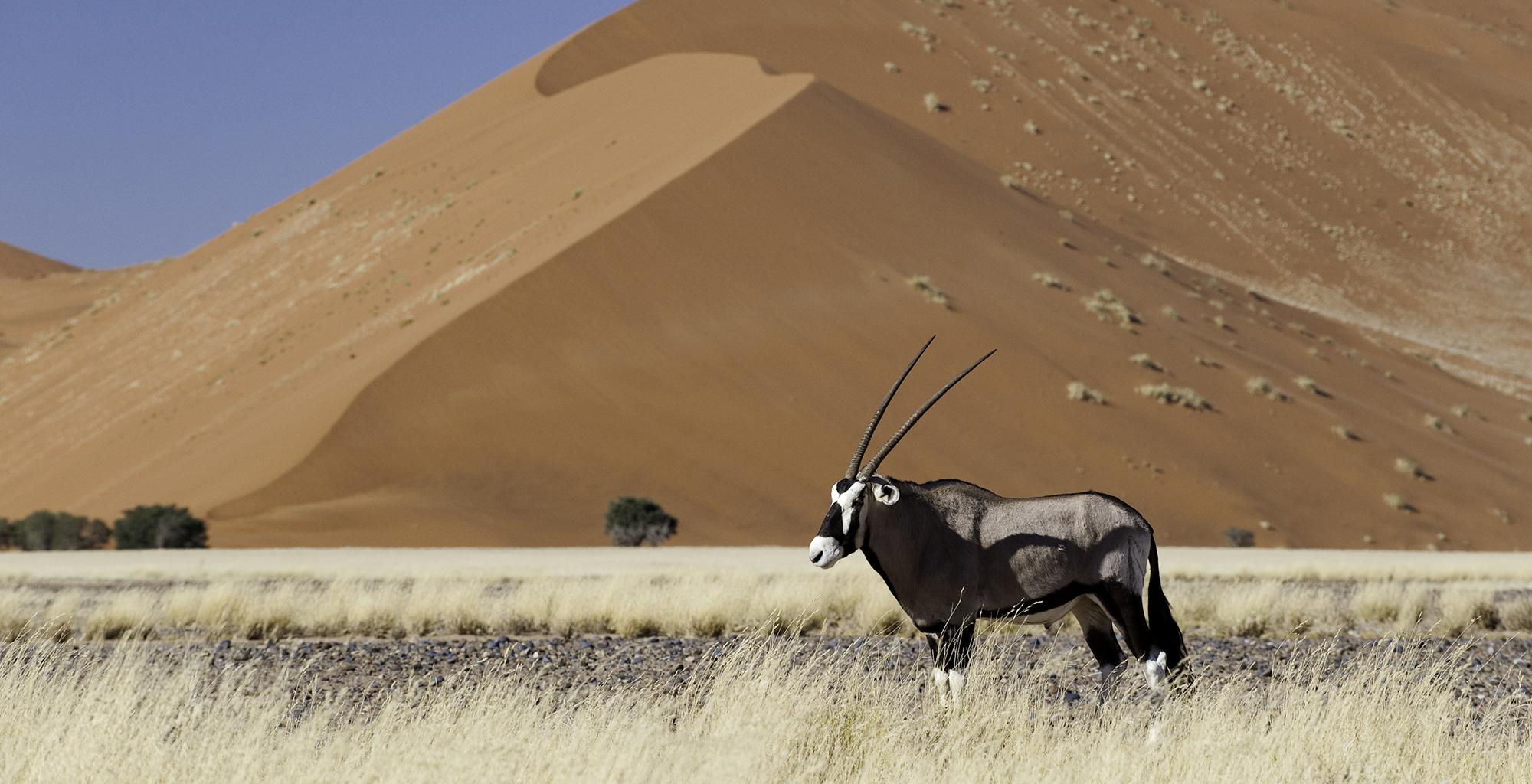 Namibia-Little-Kulala-Lodge-Wildlife