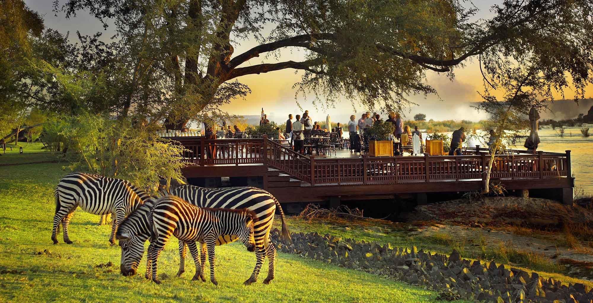 Zamnia-Royal-Livingstone-Deck-Zebra