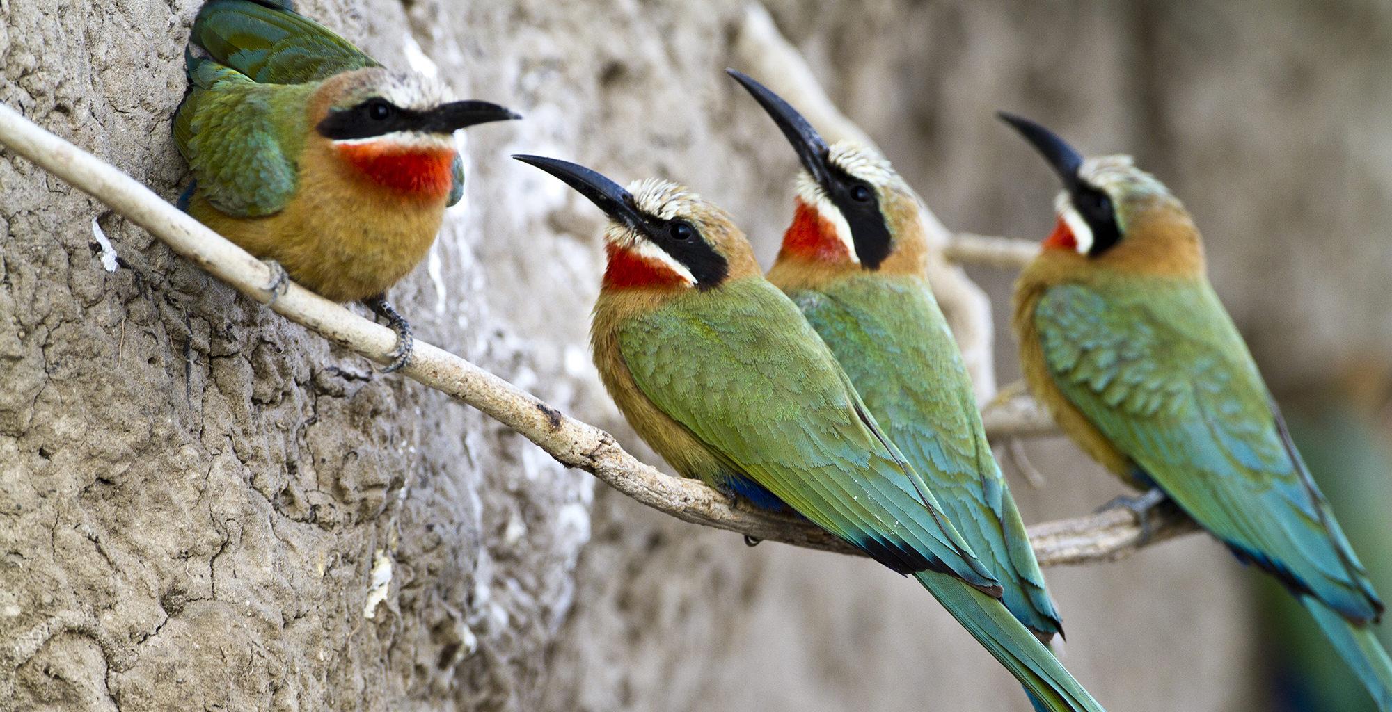 Zambia-Victoria-Falls-Wildlife-Birds