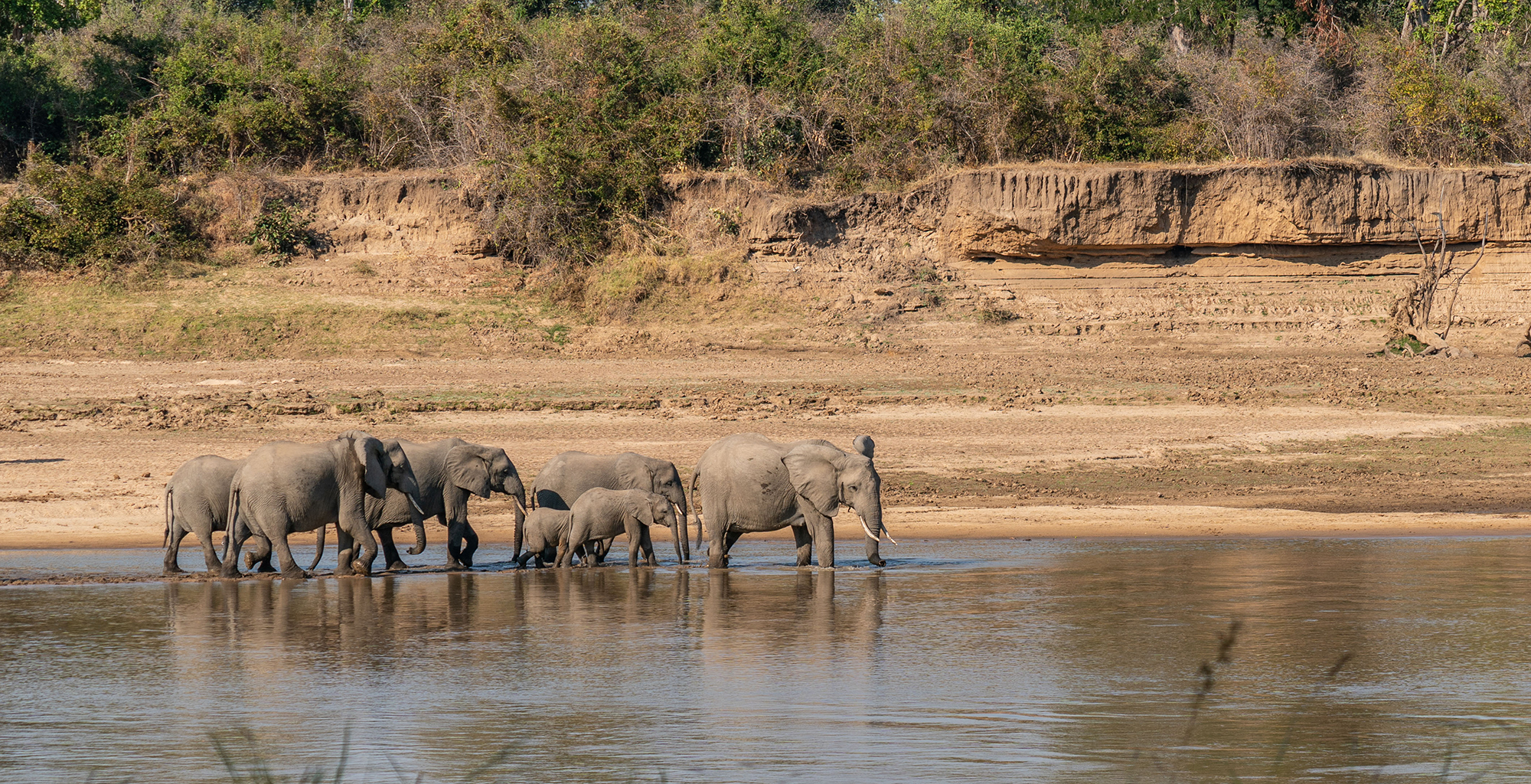 Zambia-Time-Tide-Mchenja-Wildlife-Elephant