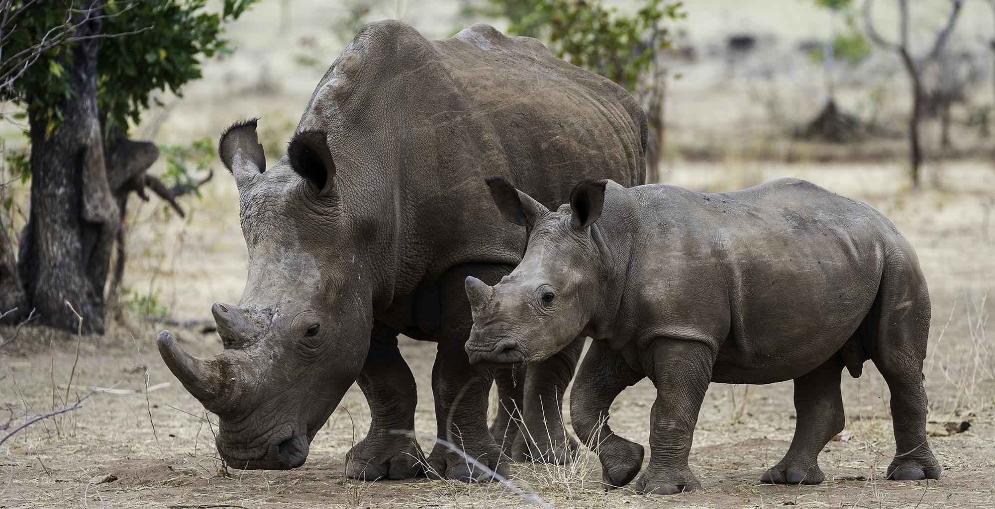 Zambia-Toka-Leya-Wildlife-Rhino