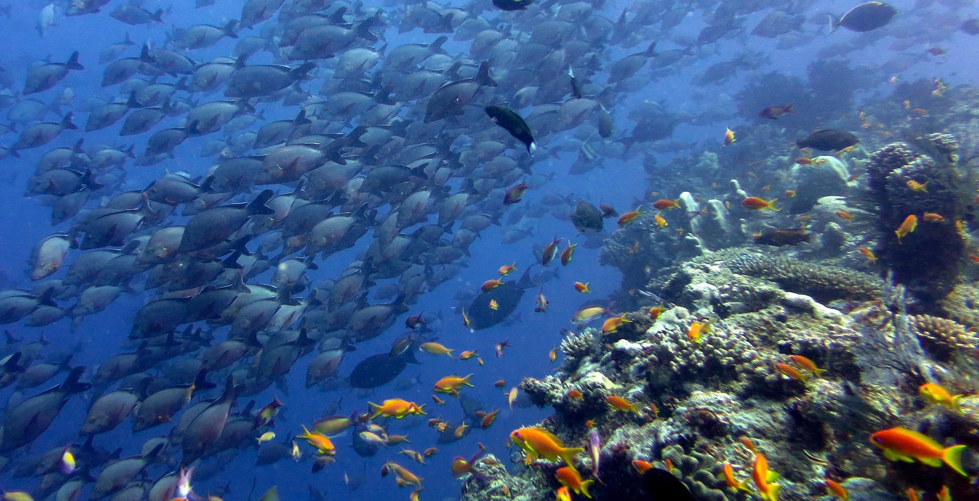 Mozambique-Quirimbas-Archipelago-Sealife-Scuba-Dive