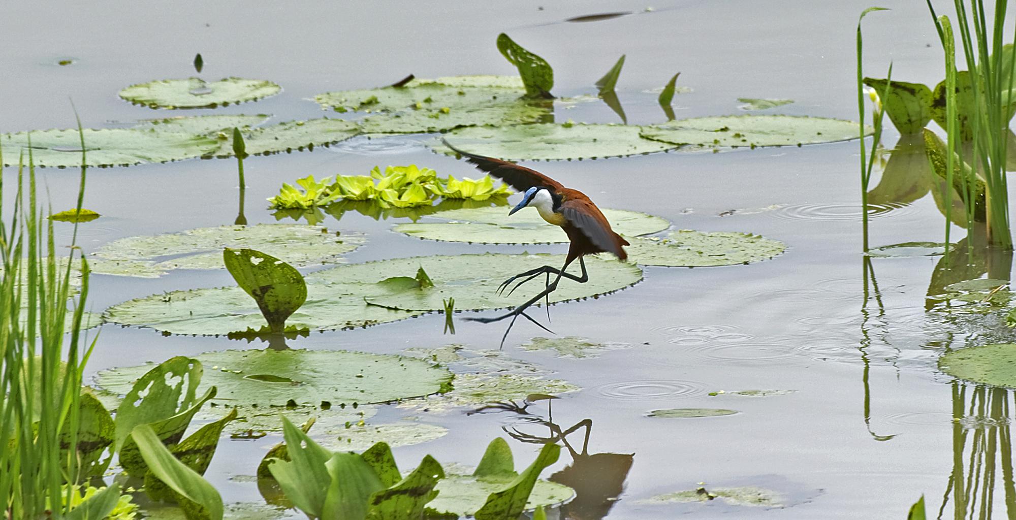Zambia-Chichele-Presidential-Birdlife