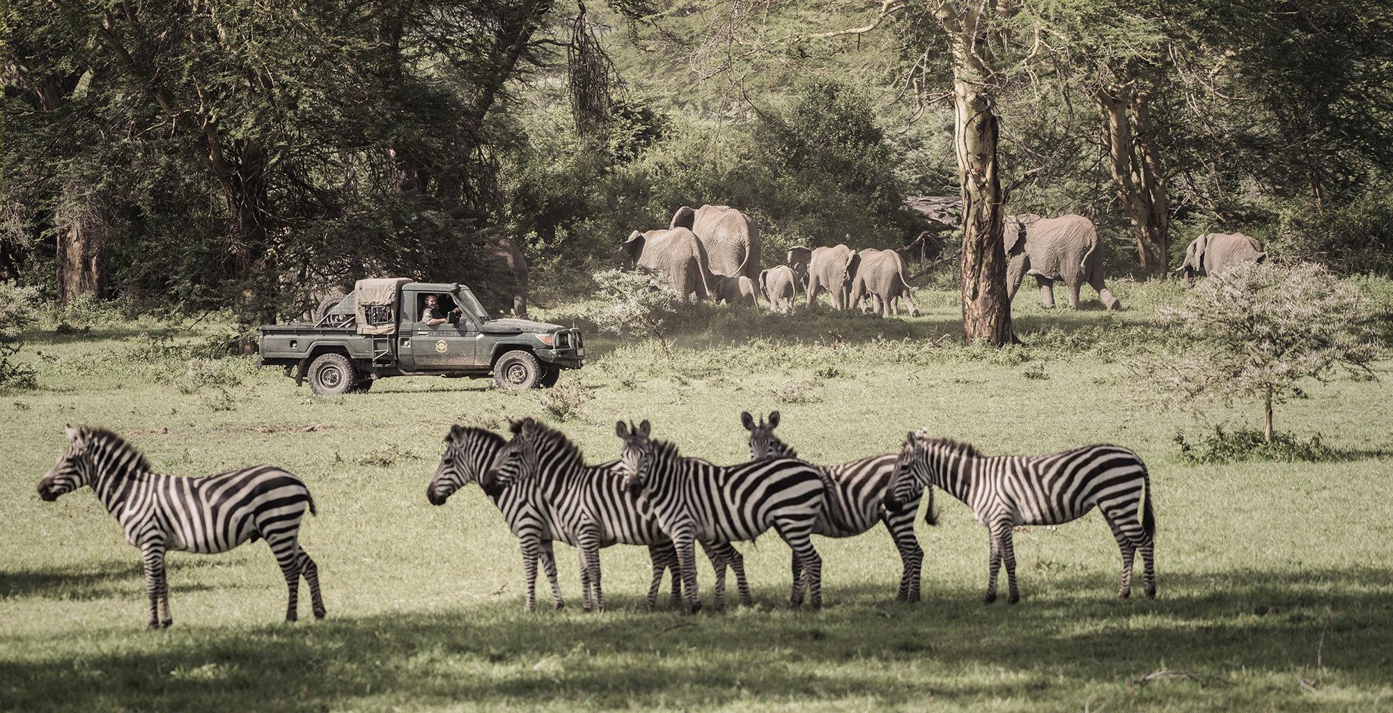 Kenya-Olarro-Lodge-Wildlife-Zebra