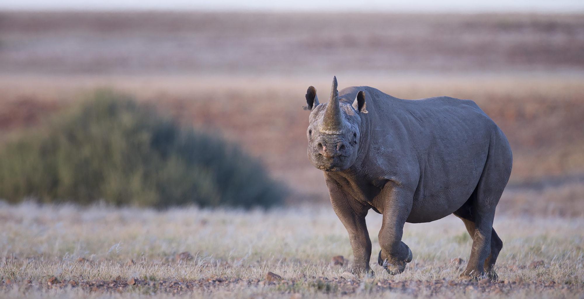 Namibia-Desert-Rhino-Camp-Rhino