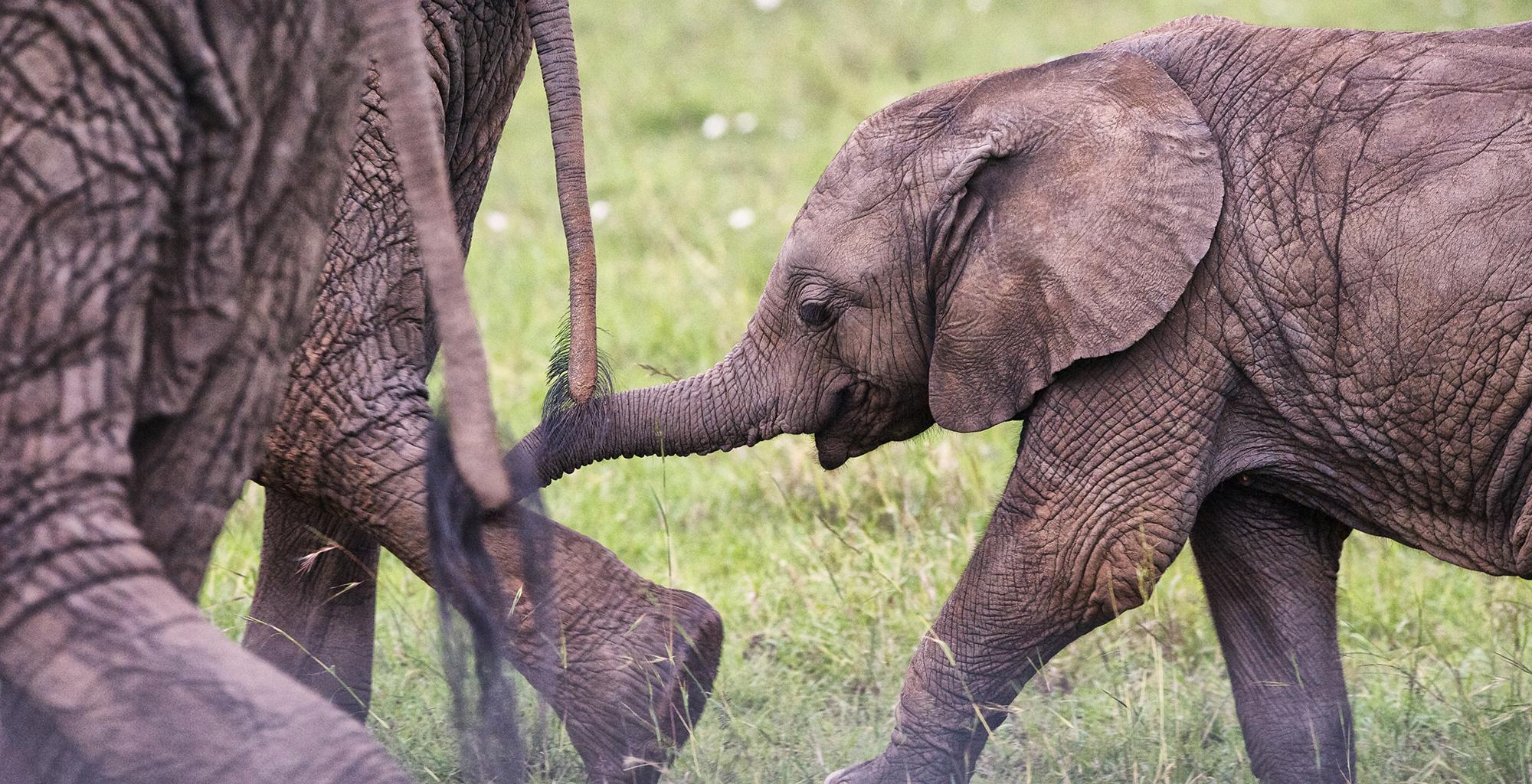 Kenya-Acacia-House-Elephants