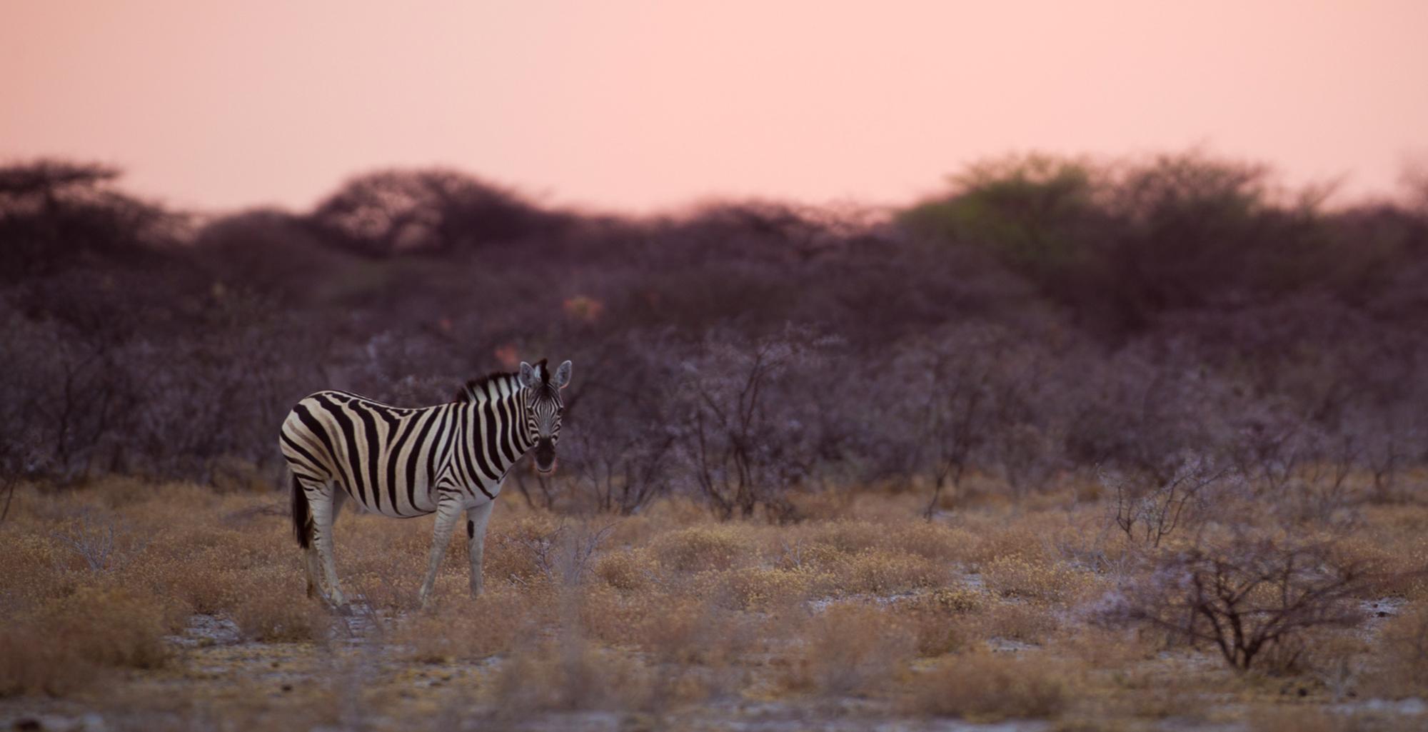 Namibia-Etosha-National-Park-Landscape-Sunset
