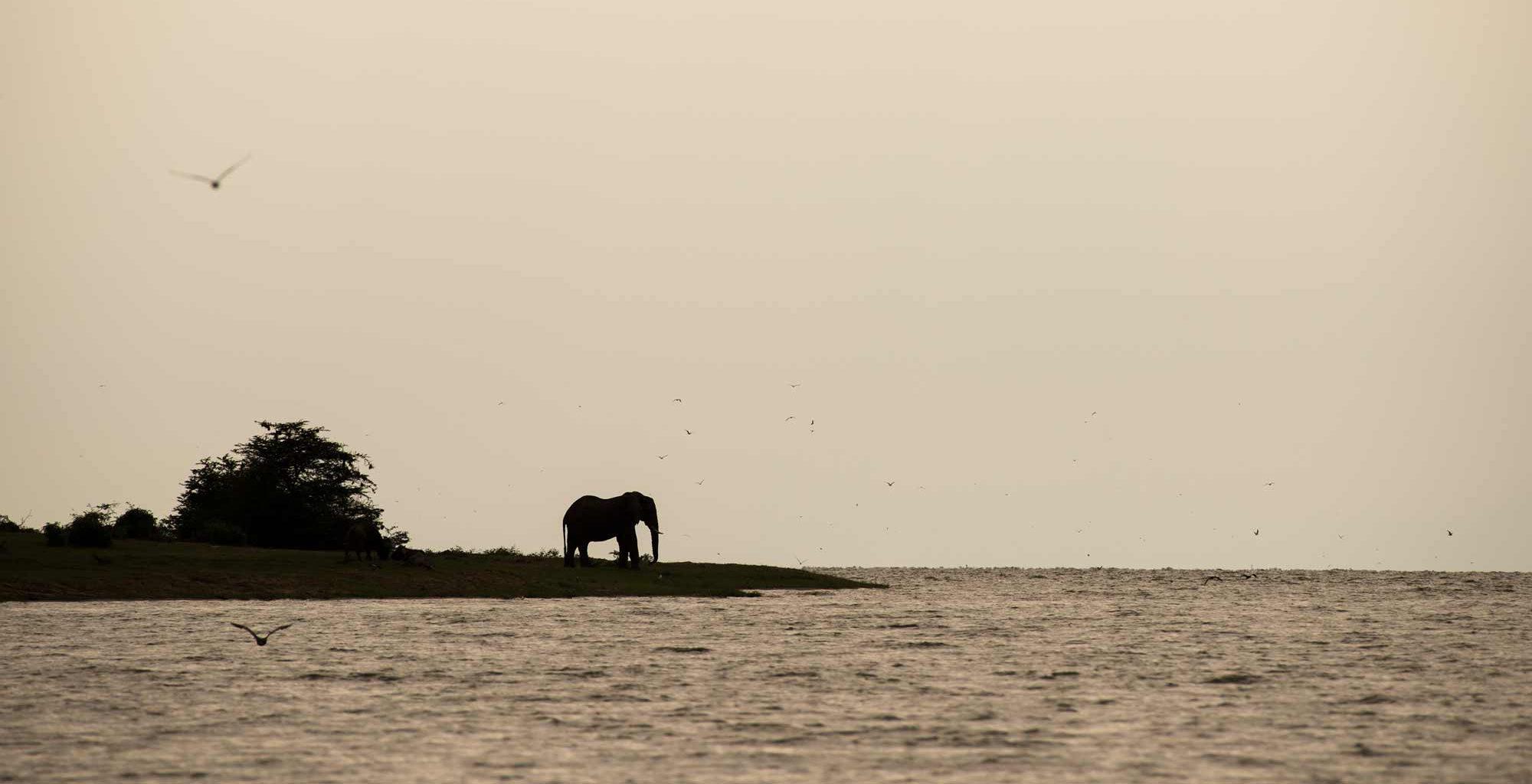 Uganda-Queen-Elizabeth-National-Park-Wildlife-Elephant