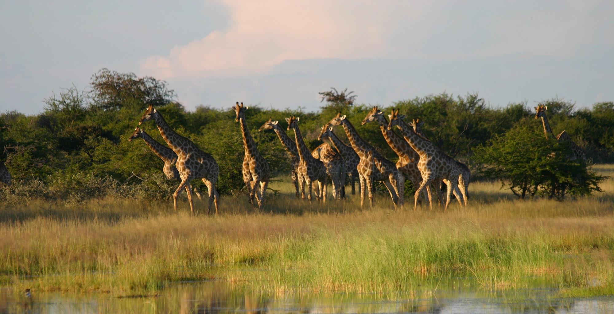 Namibia-Etosha-National-Park-Wildlife-Giraffe