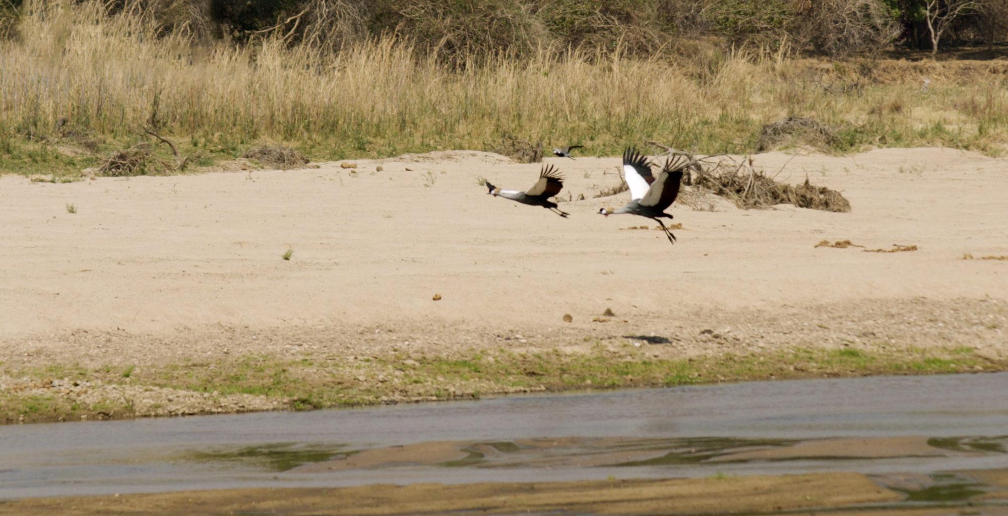 Zambia-North-Luangwa-Wildlife-Birds