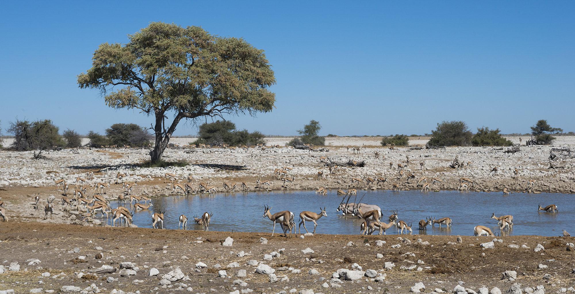 Namibia-Etosha-National-Park-Waterhole